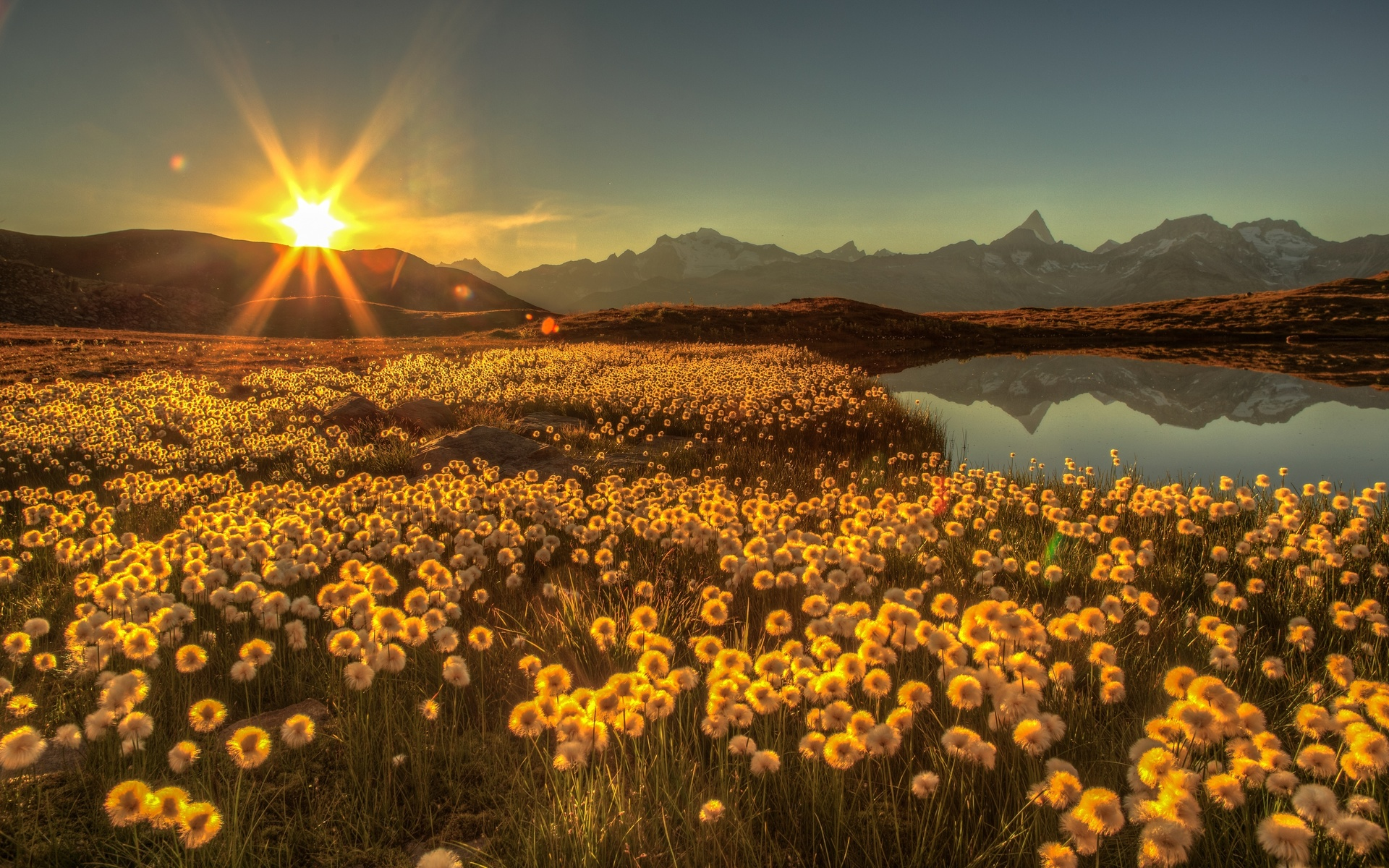 Картинки с добрым вечером с видом на солнечное поле ромашек