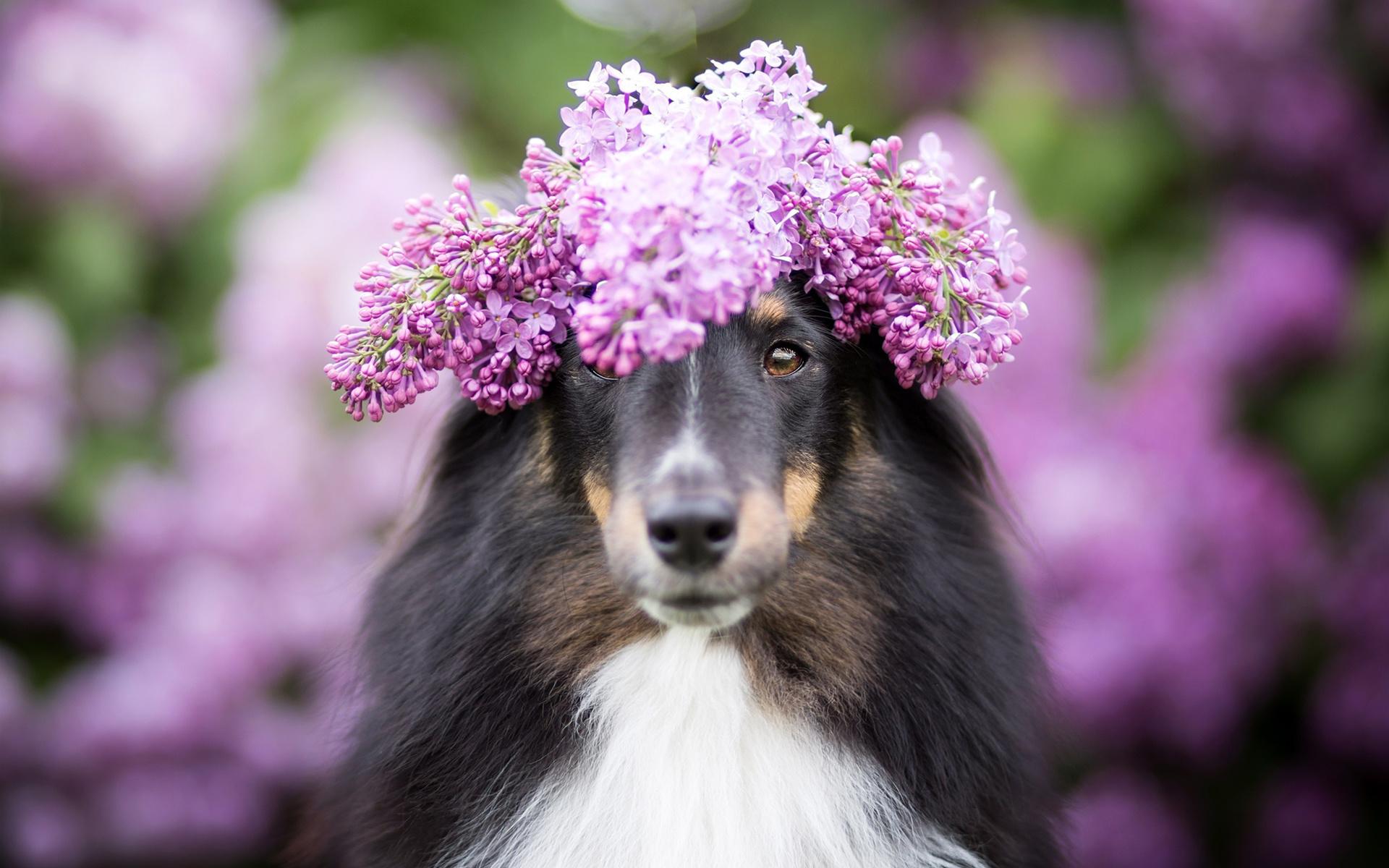западная весна картинки с собаками больше