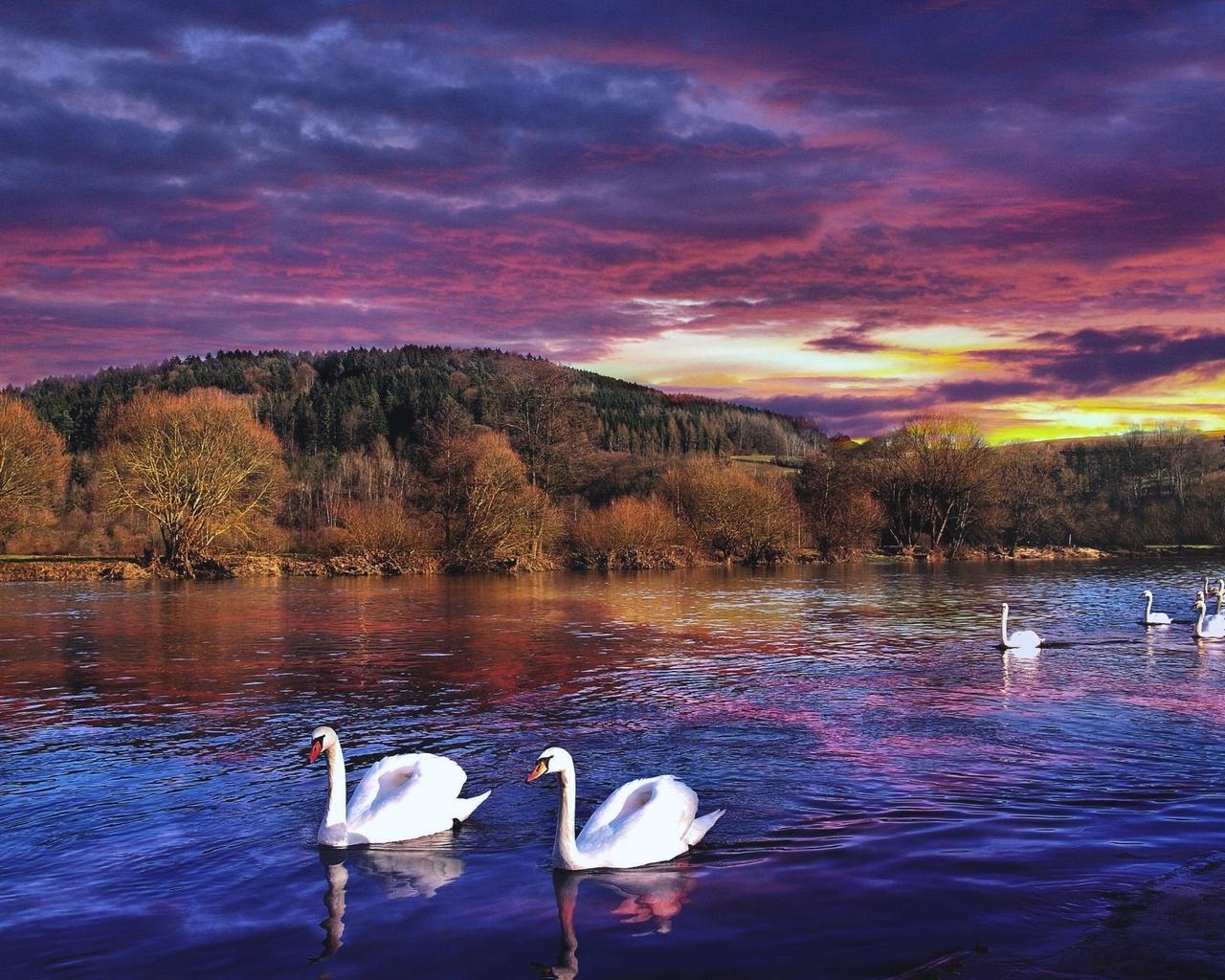 картинки лебединое озеро природа пилинг способен