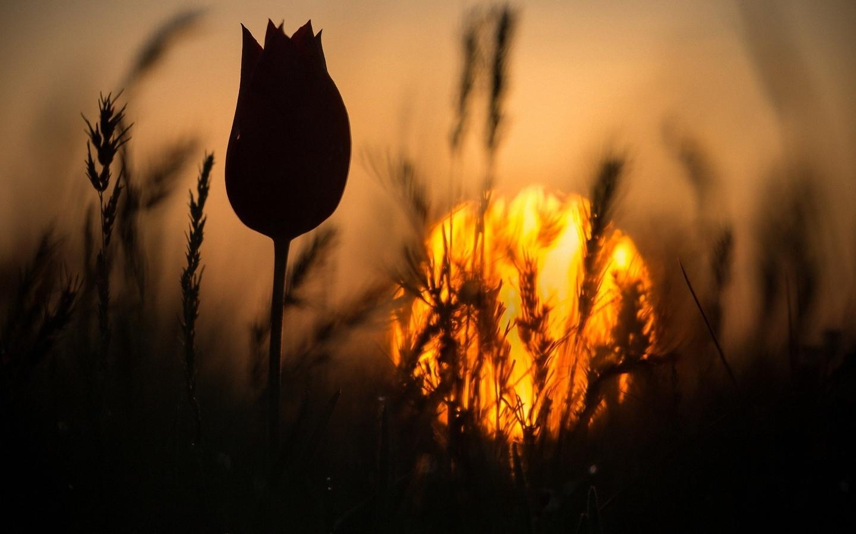 россии картинки цветы на фоне заката значительно экономит