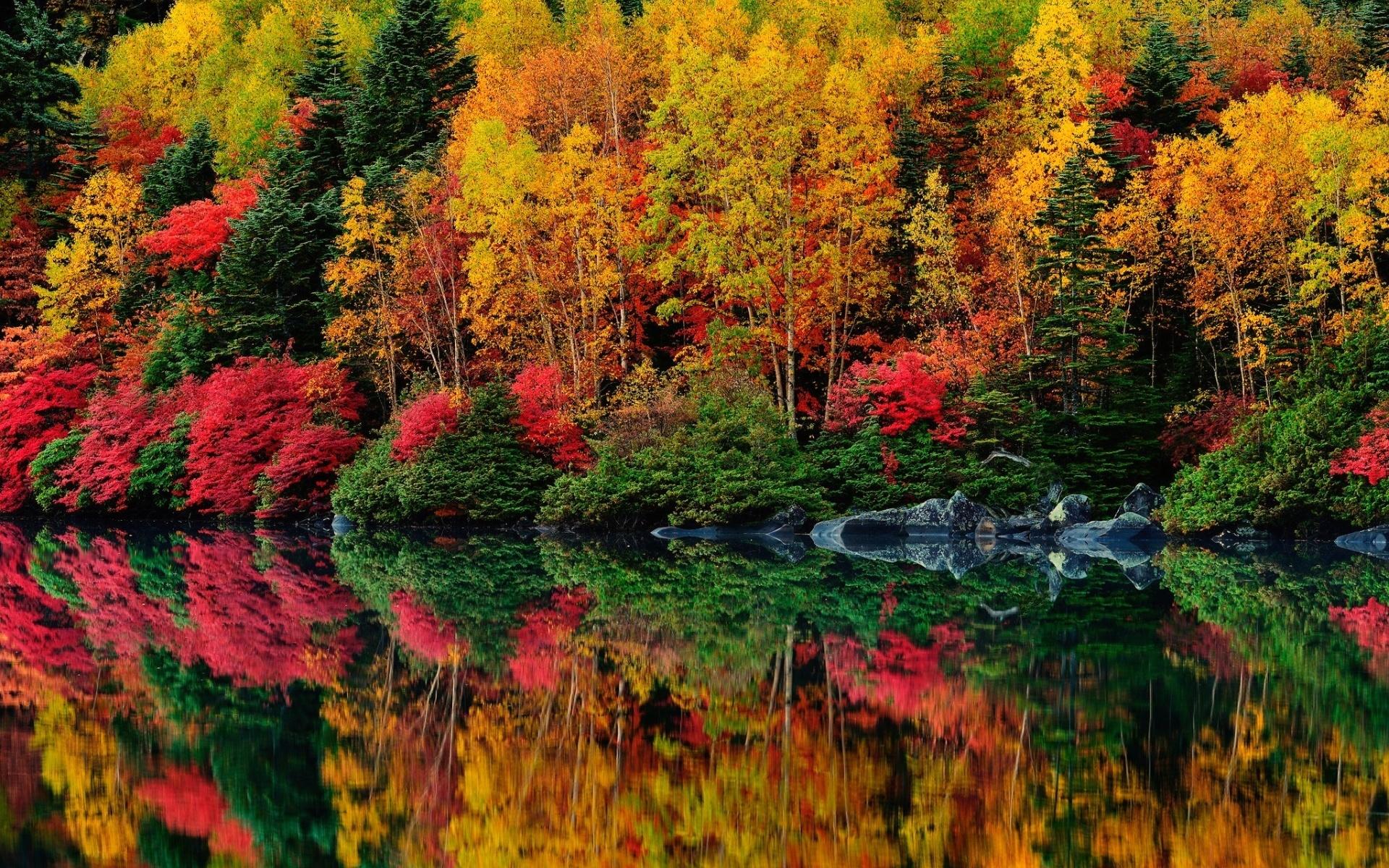 массовый яркие осенние картинки фото сам-то фотограф