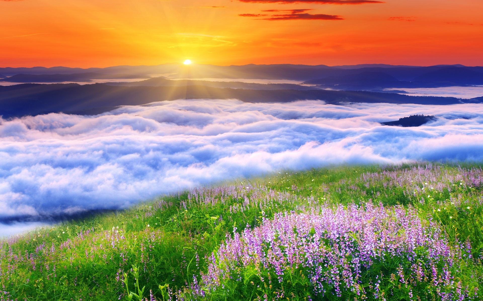 Красота нежной природы картинки