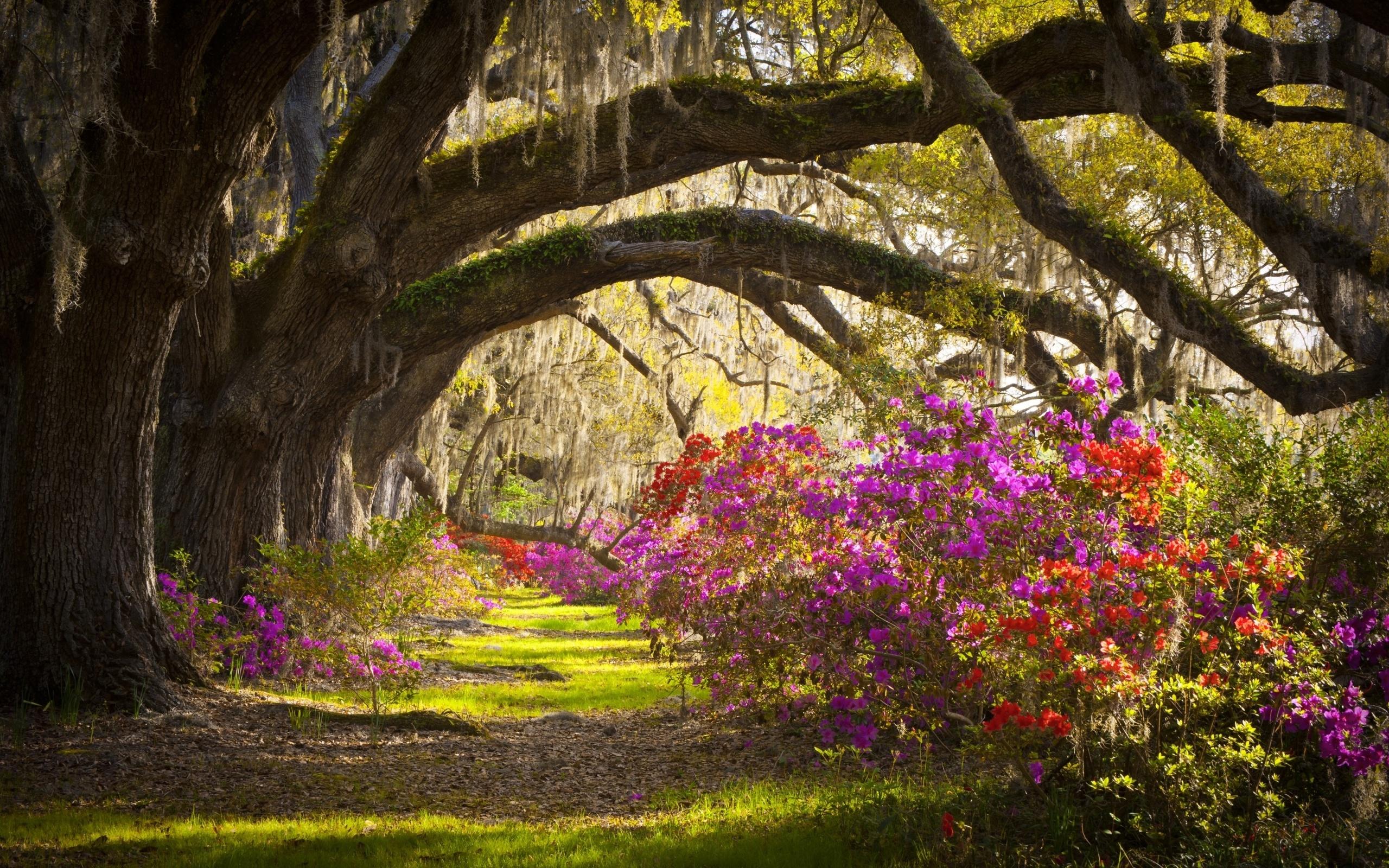 картинки на стену природа и цветы фоне