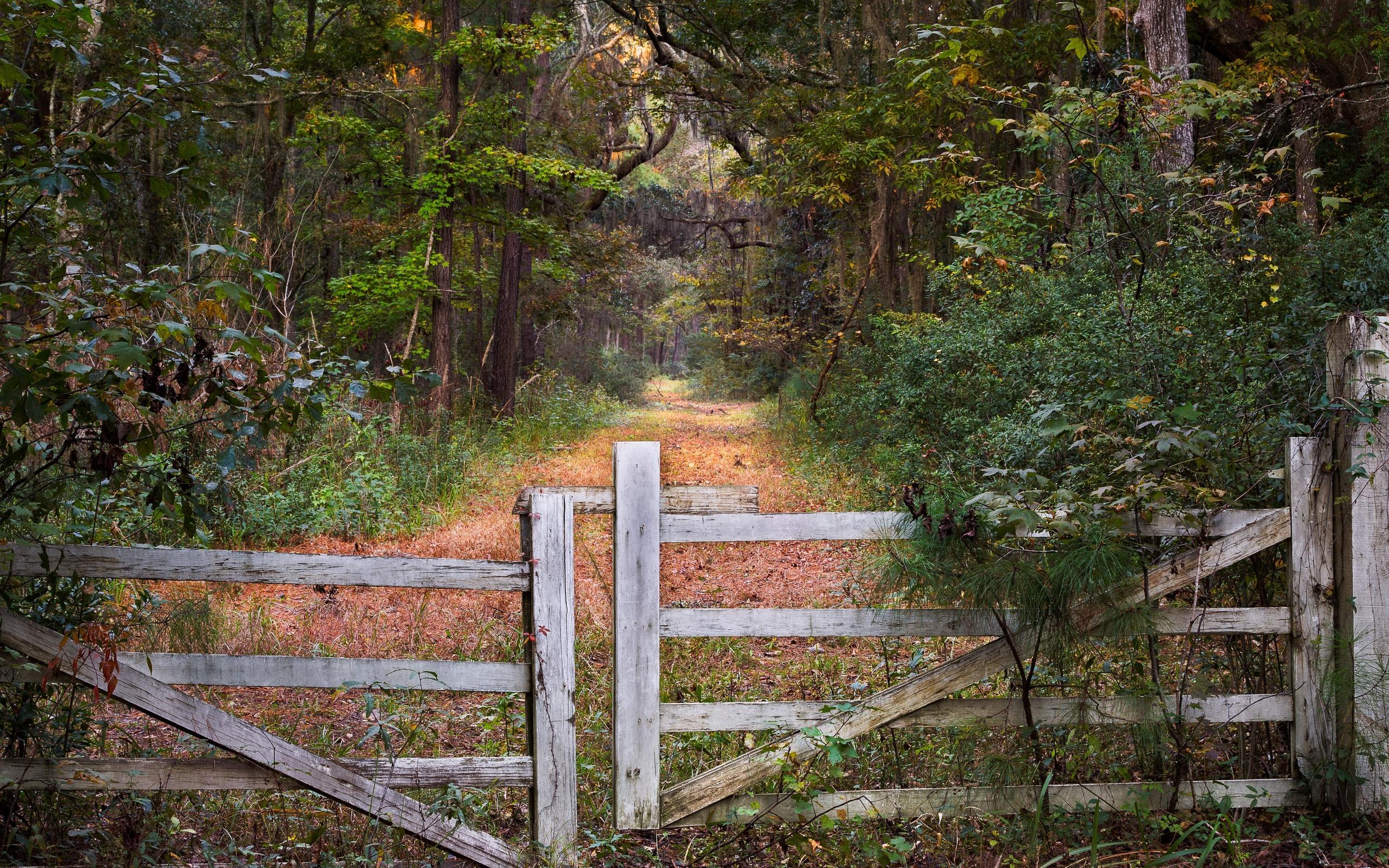 картинки лес и забор реклама