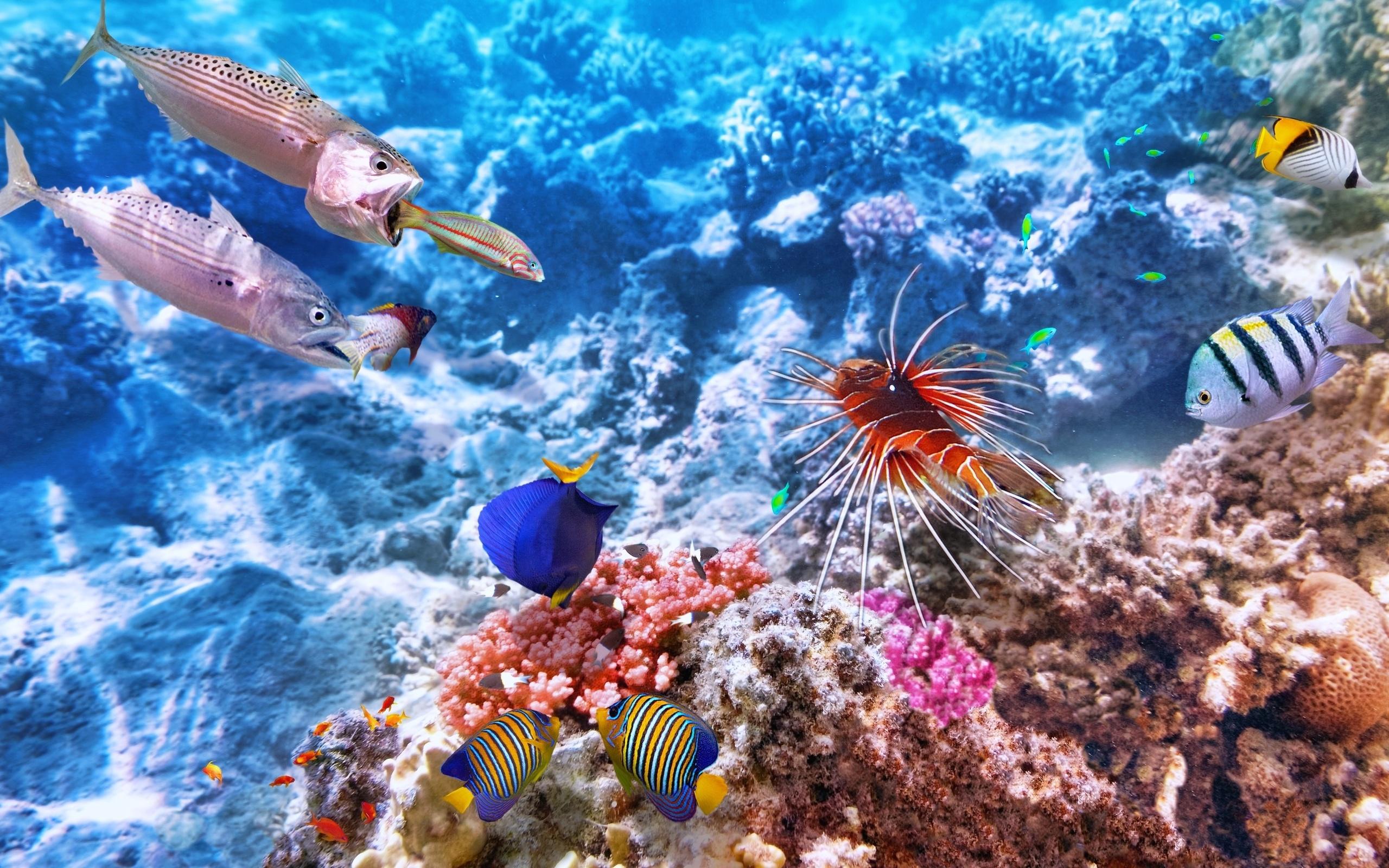 Картинки подводный мир картинки для рабочего стола