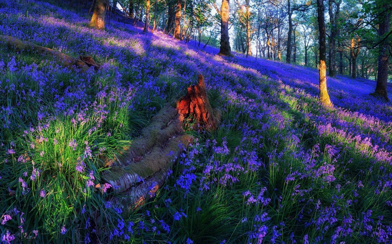 Днем, картинки цветы лес
