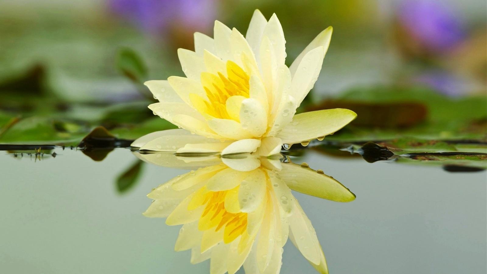 Отражение в воде картинки цветы