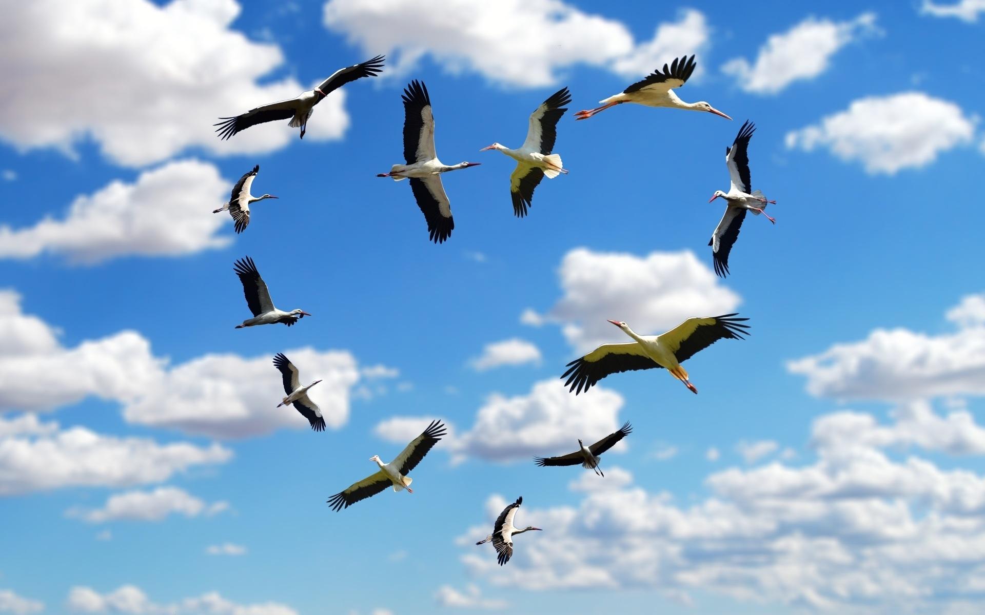 картинки с летящими птицами красивые разница вместо