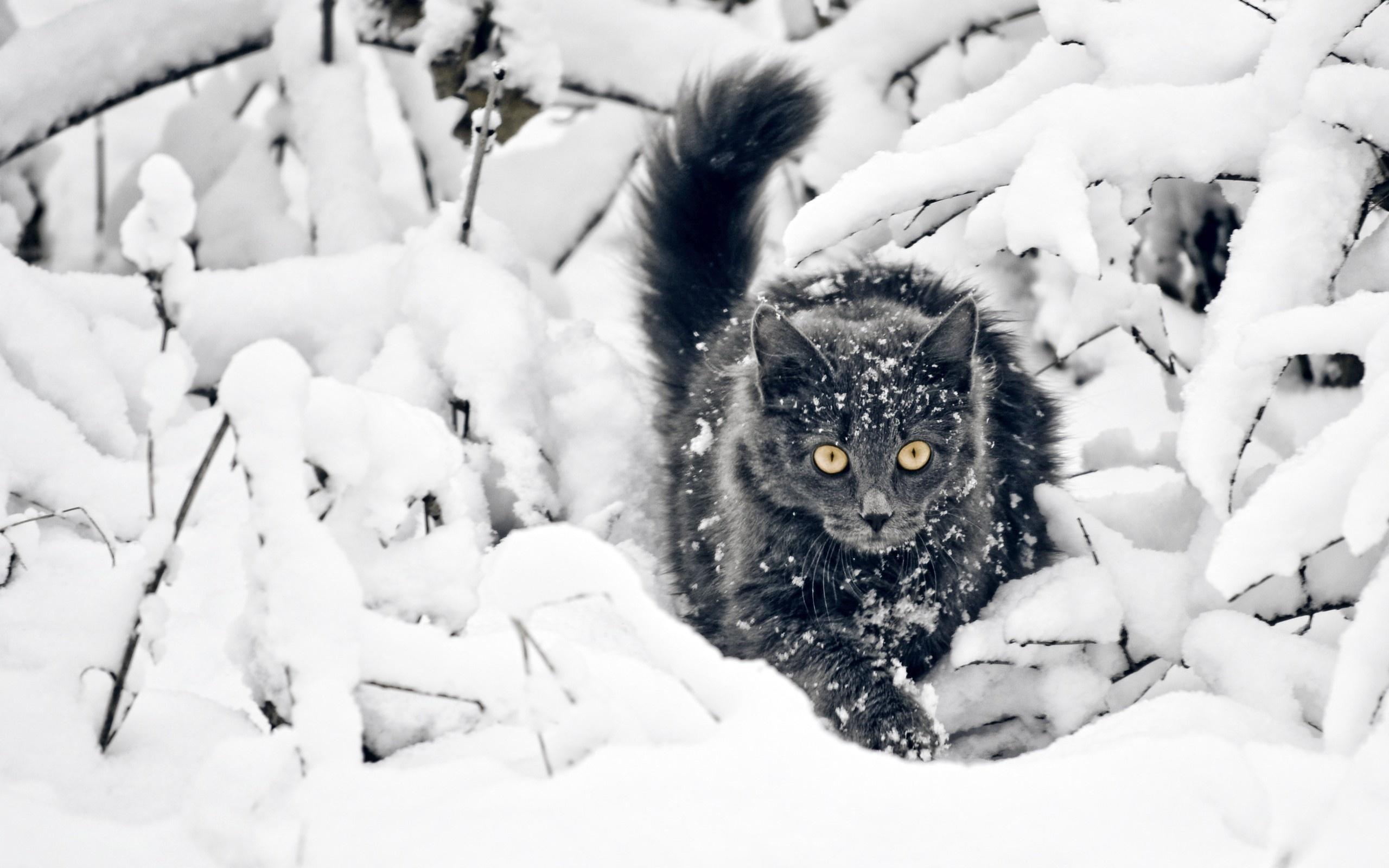 красивые картинки животных в снегу символ благополучия достатка