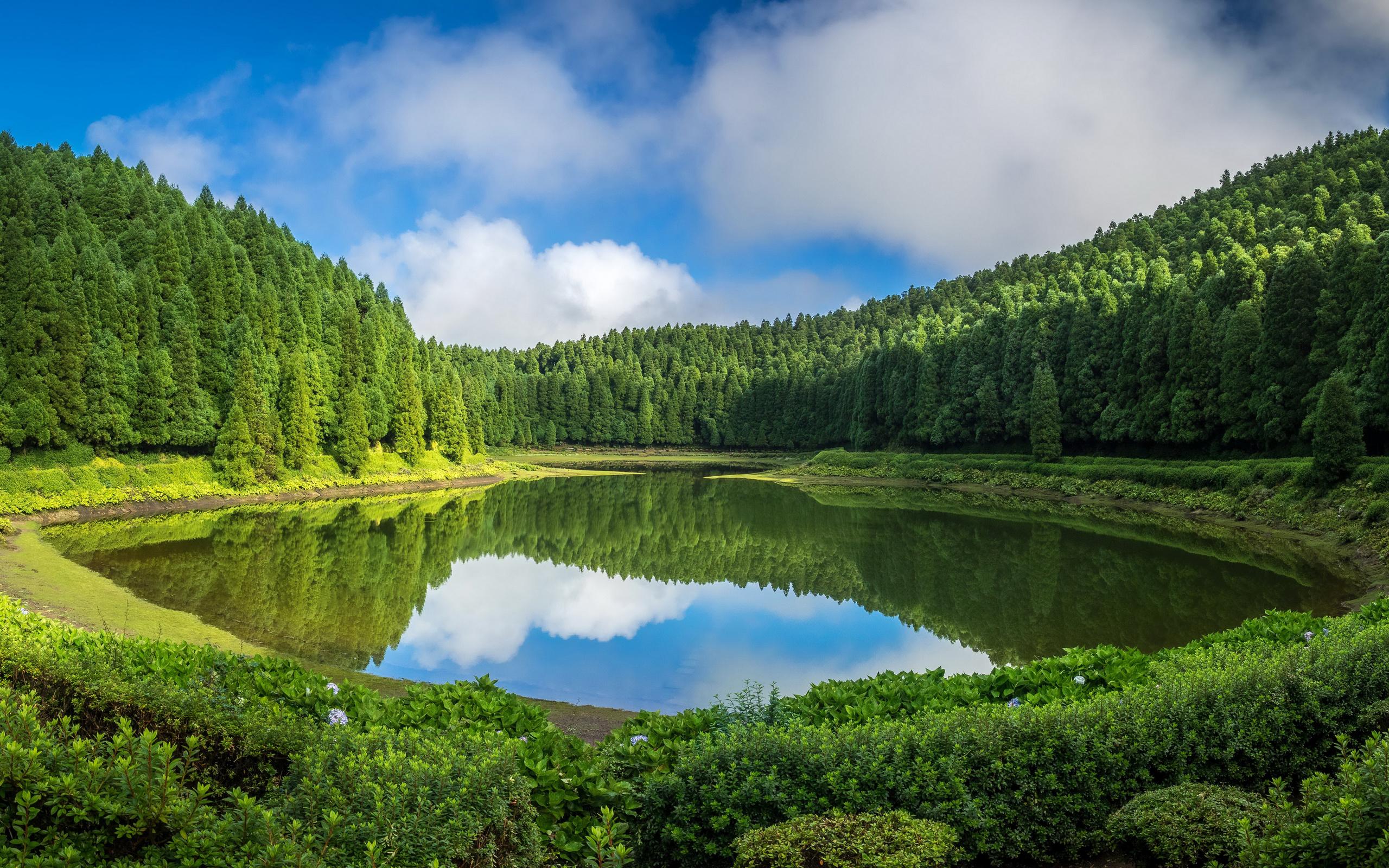 Озеро в лесу красивые картинки