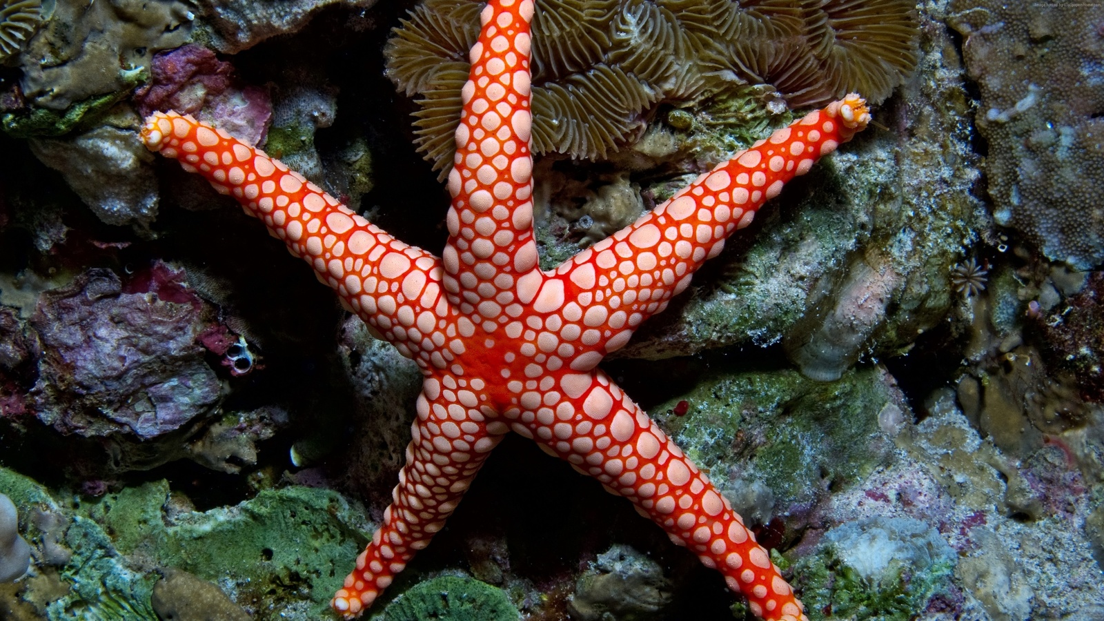Картинка морской звезды