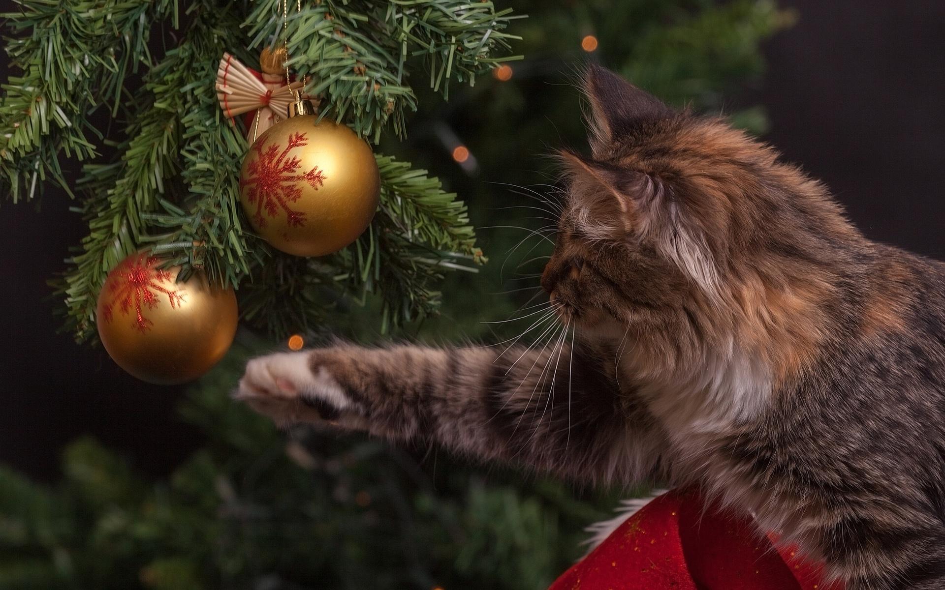 ворон новогодние фотографии с кошками сочных вкусных