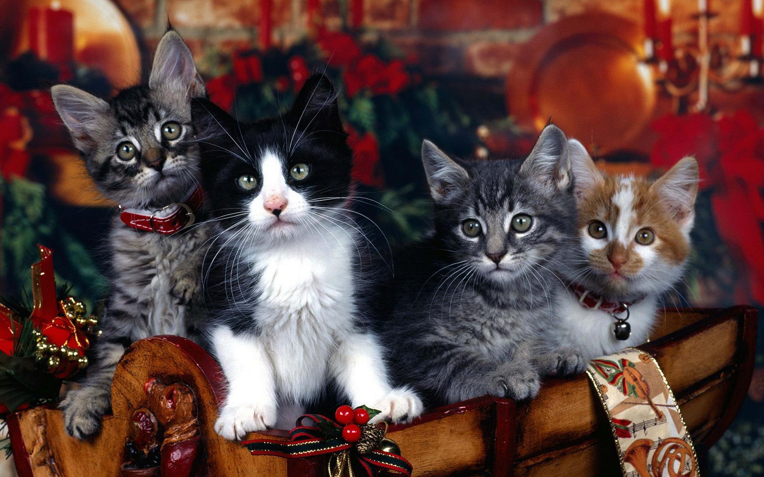 Картинки на компьютер с котятами том