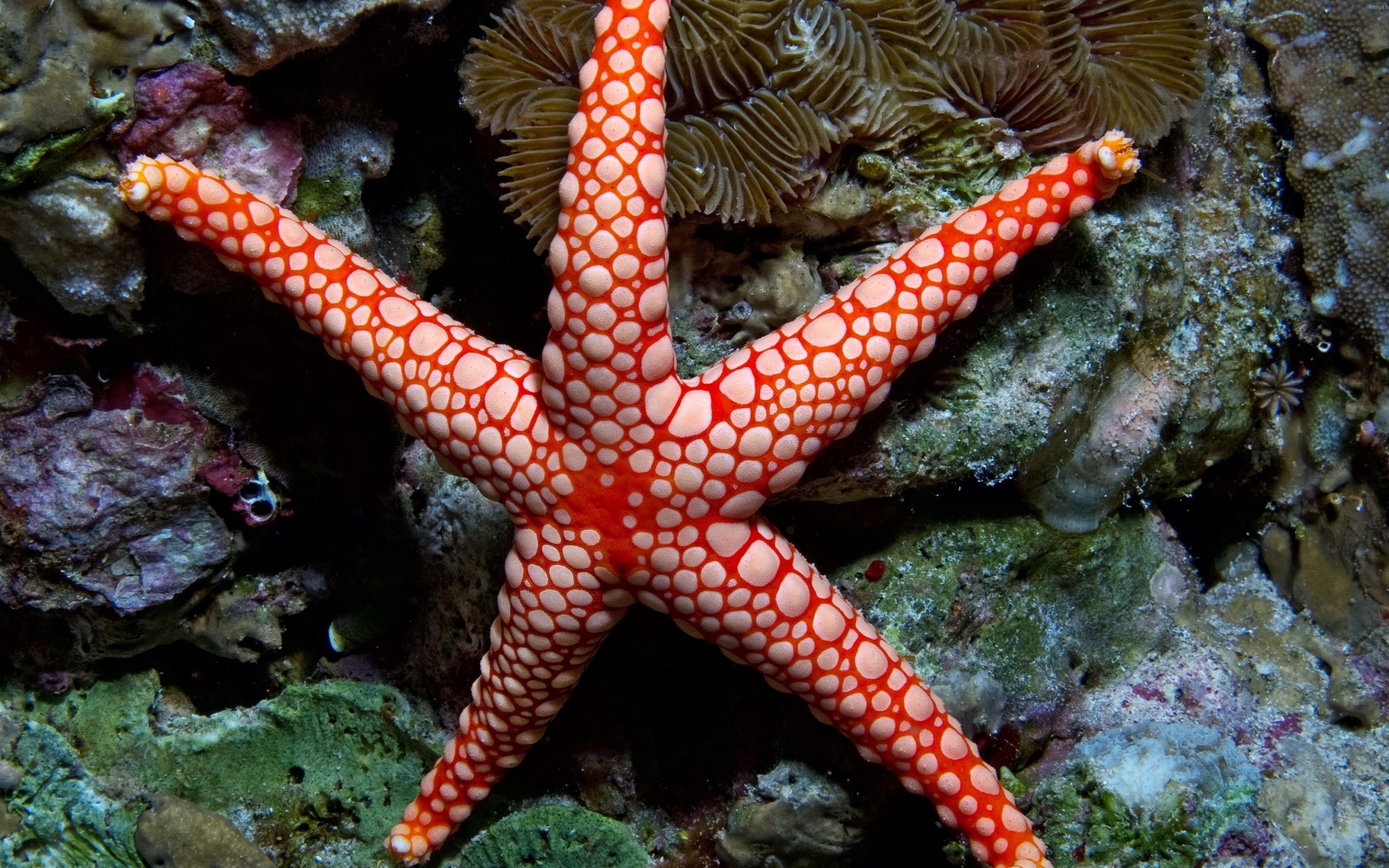 смотреть картинки морских звезд тебе золотце это