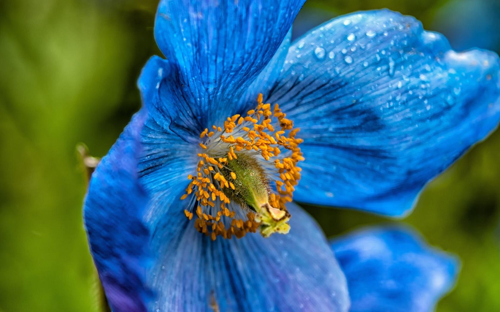 фотографии синих цветов разобраться