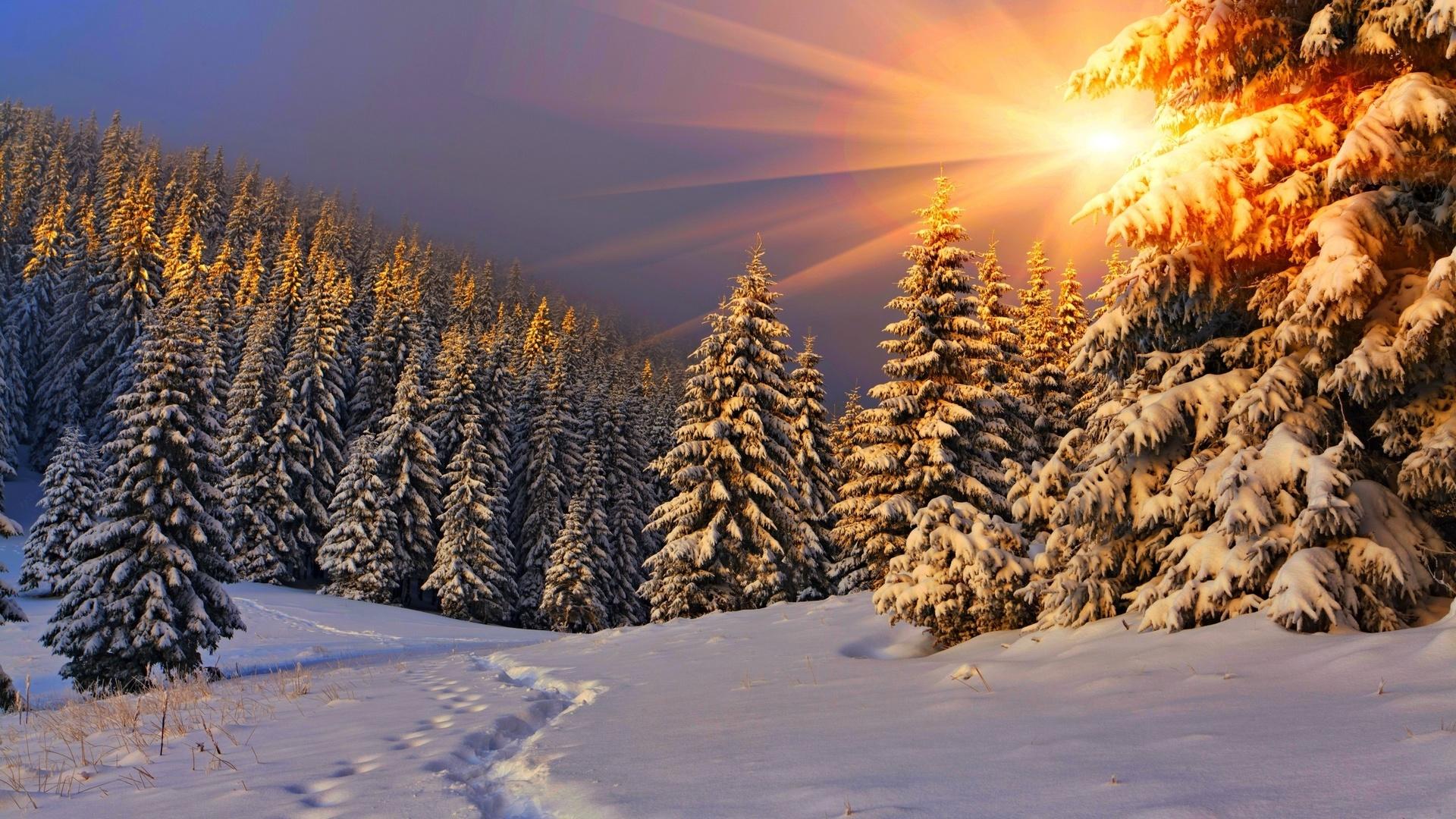 Фото открытки, красивый зимний пейзаж картинки в лесу