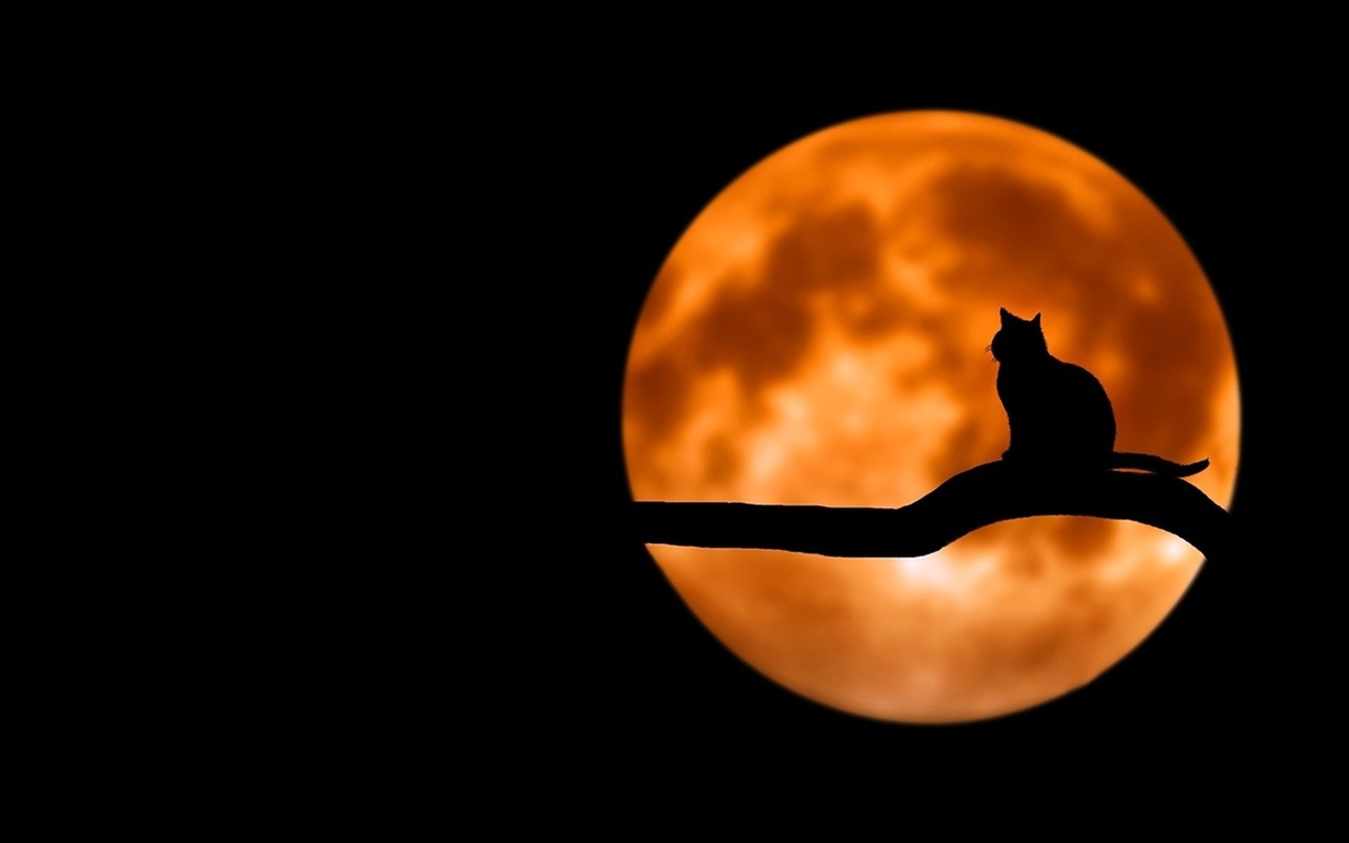 животные на фоне луны картинки