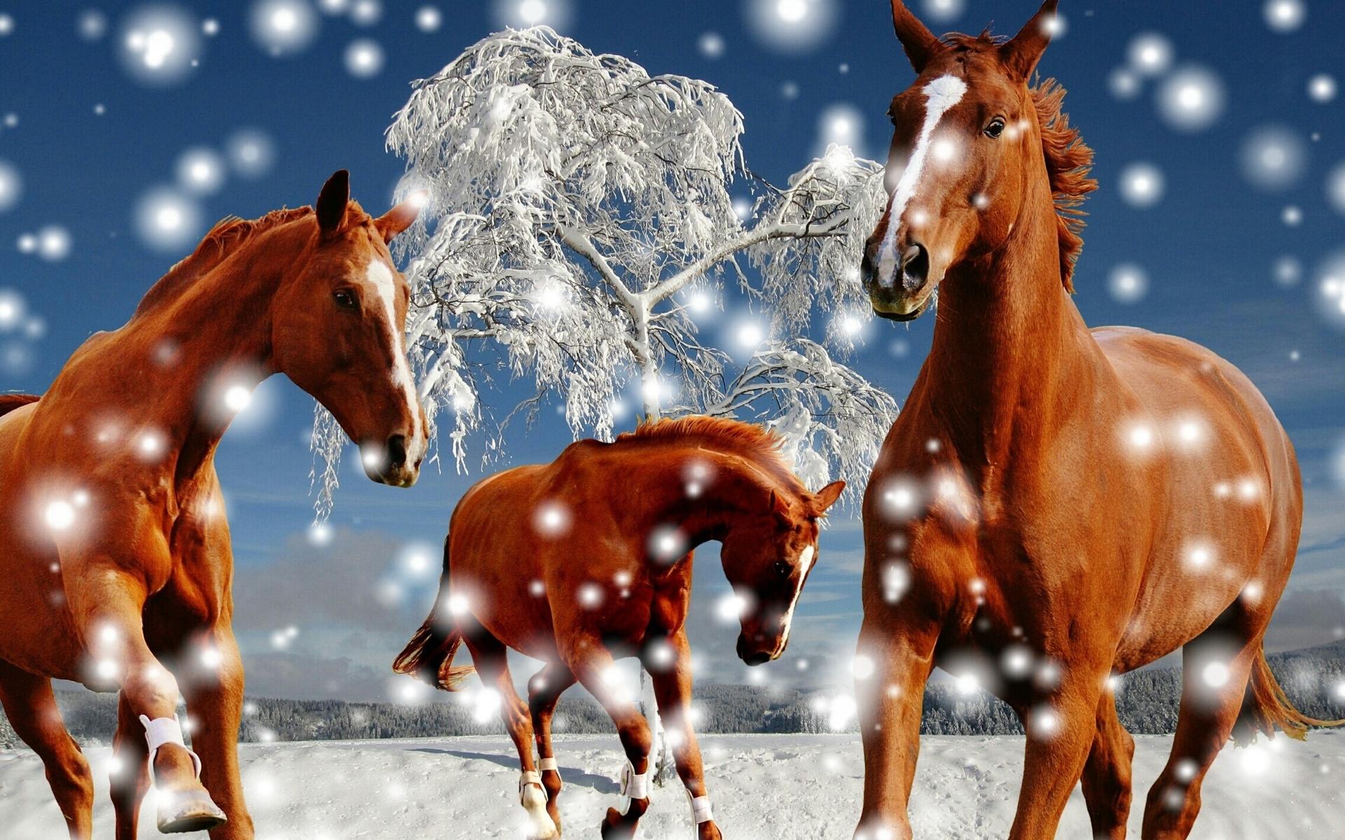 новые красивые картинки с лошадьми выпечку