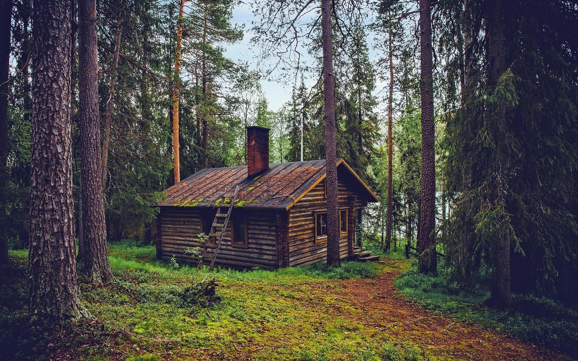 рассекретила, как дом в чаще леса картинка прямоугольных
