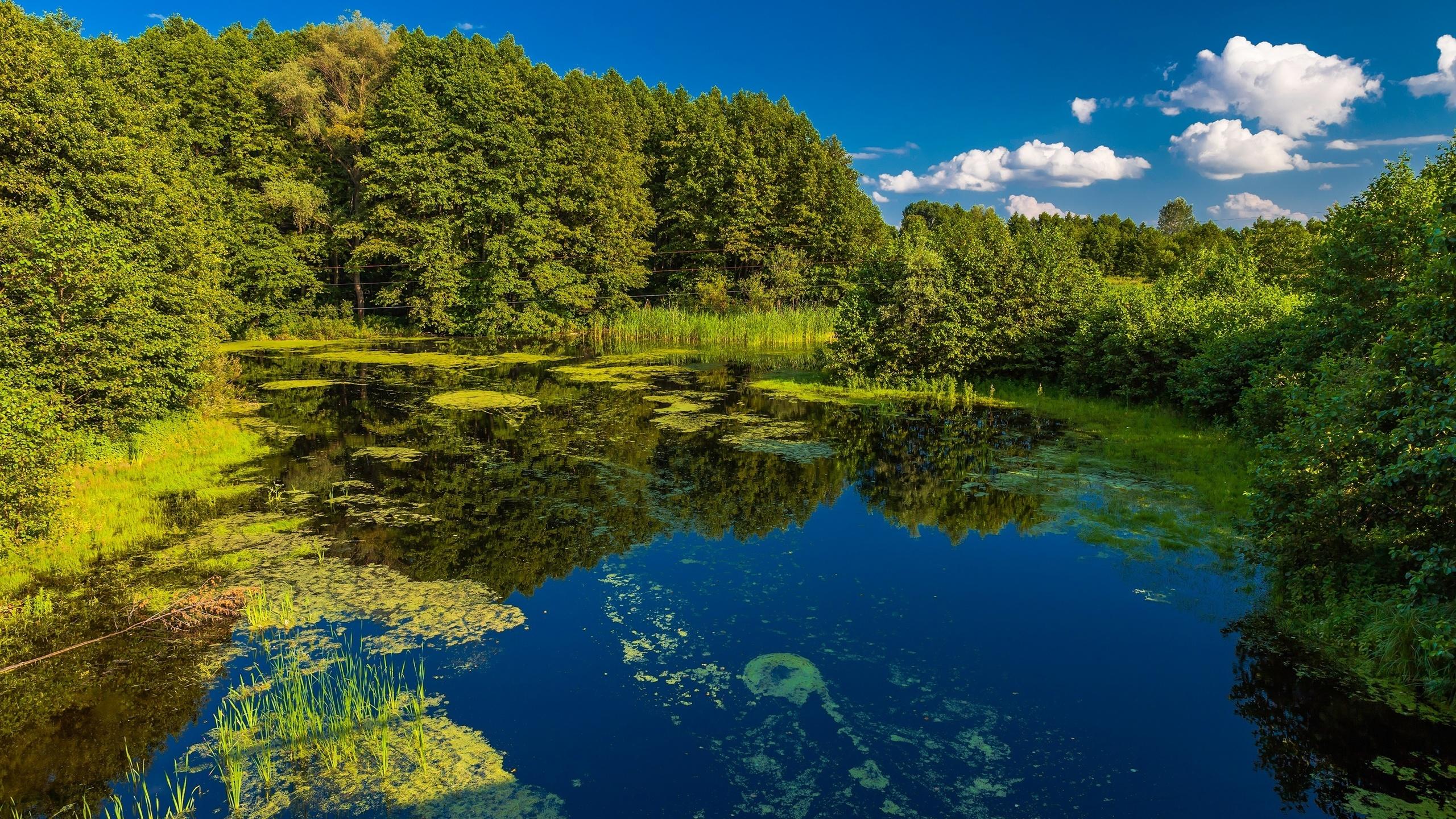 картинка природа украины летом такой шкаф-купе