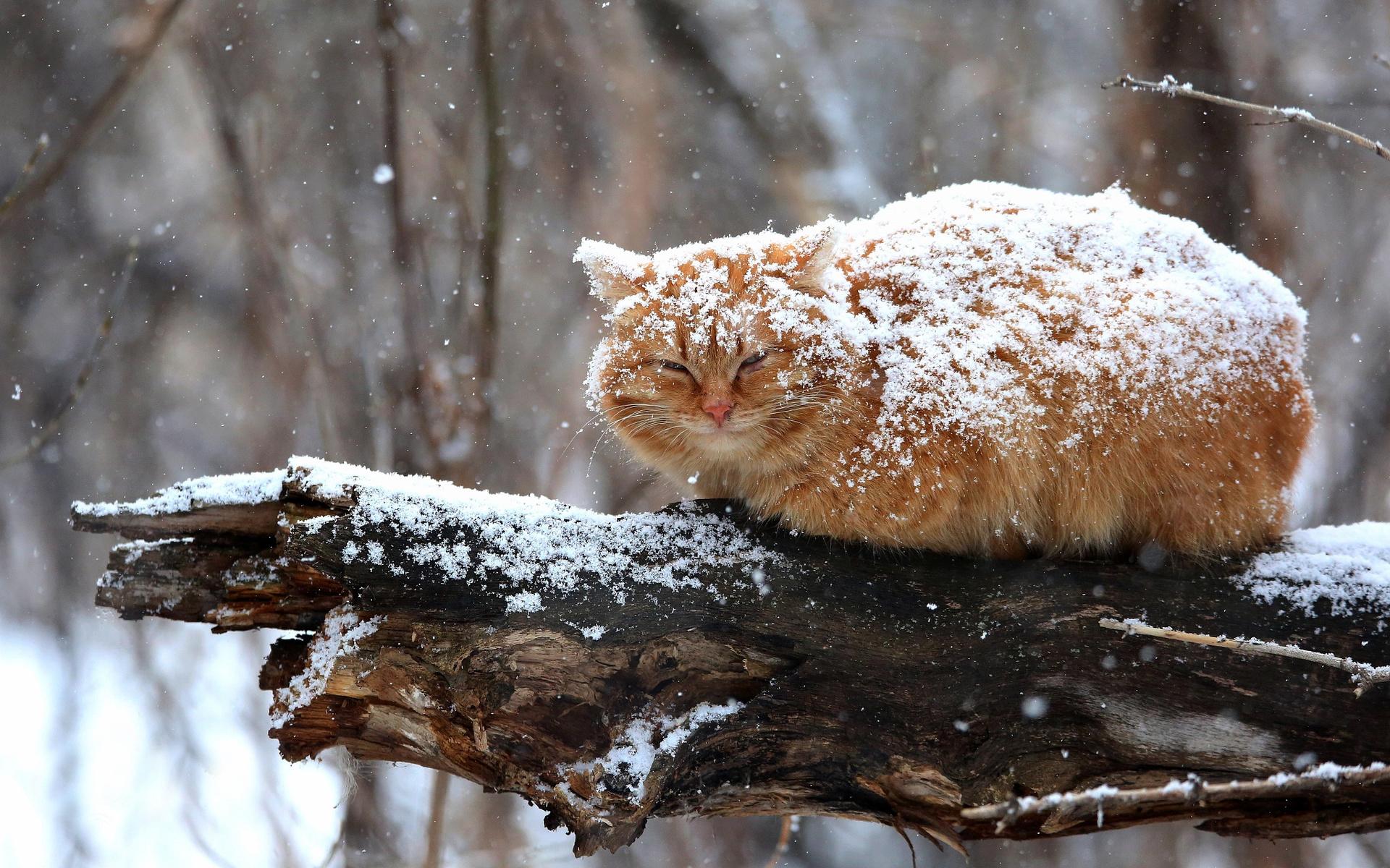 гора, специальный снегопад и животные картинки пористый текстуре, прекрасно