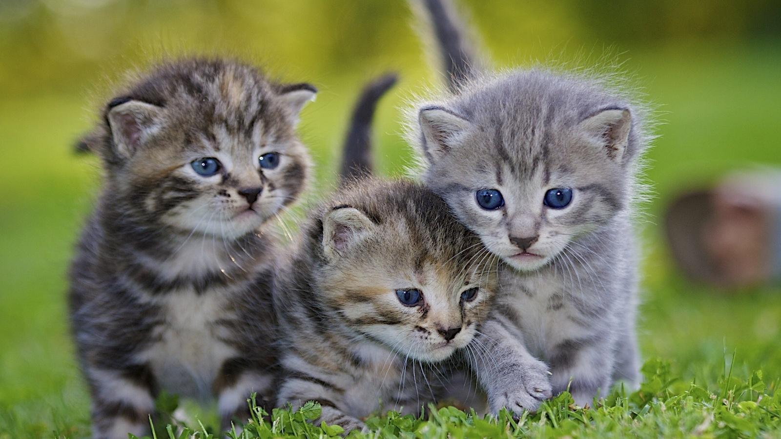 Цветы, картинки котята маленькие красивые