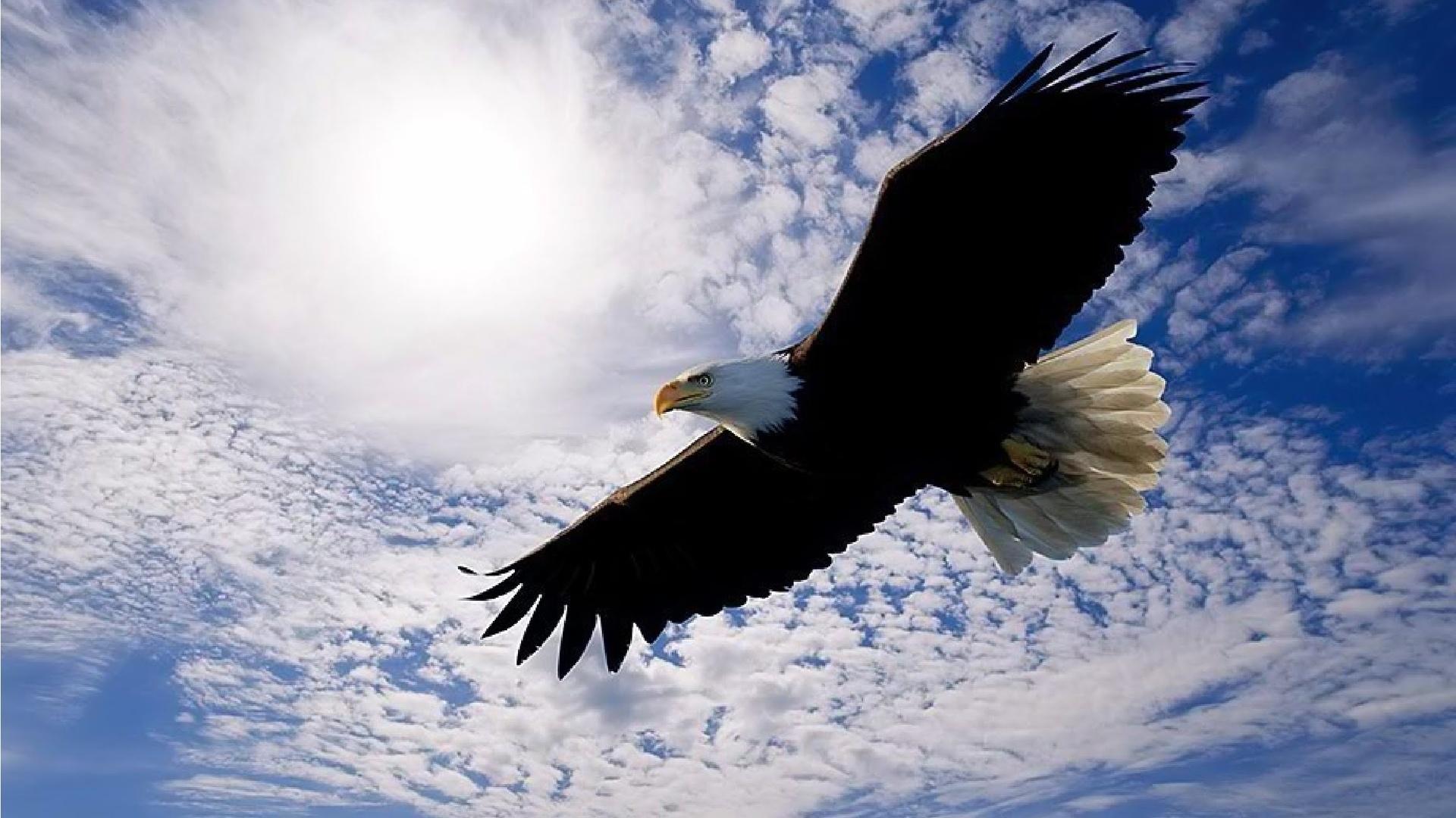 Открытка горный орел