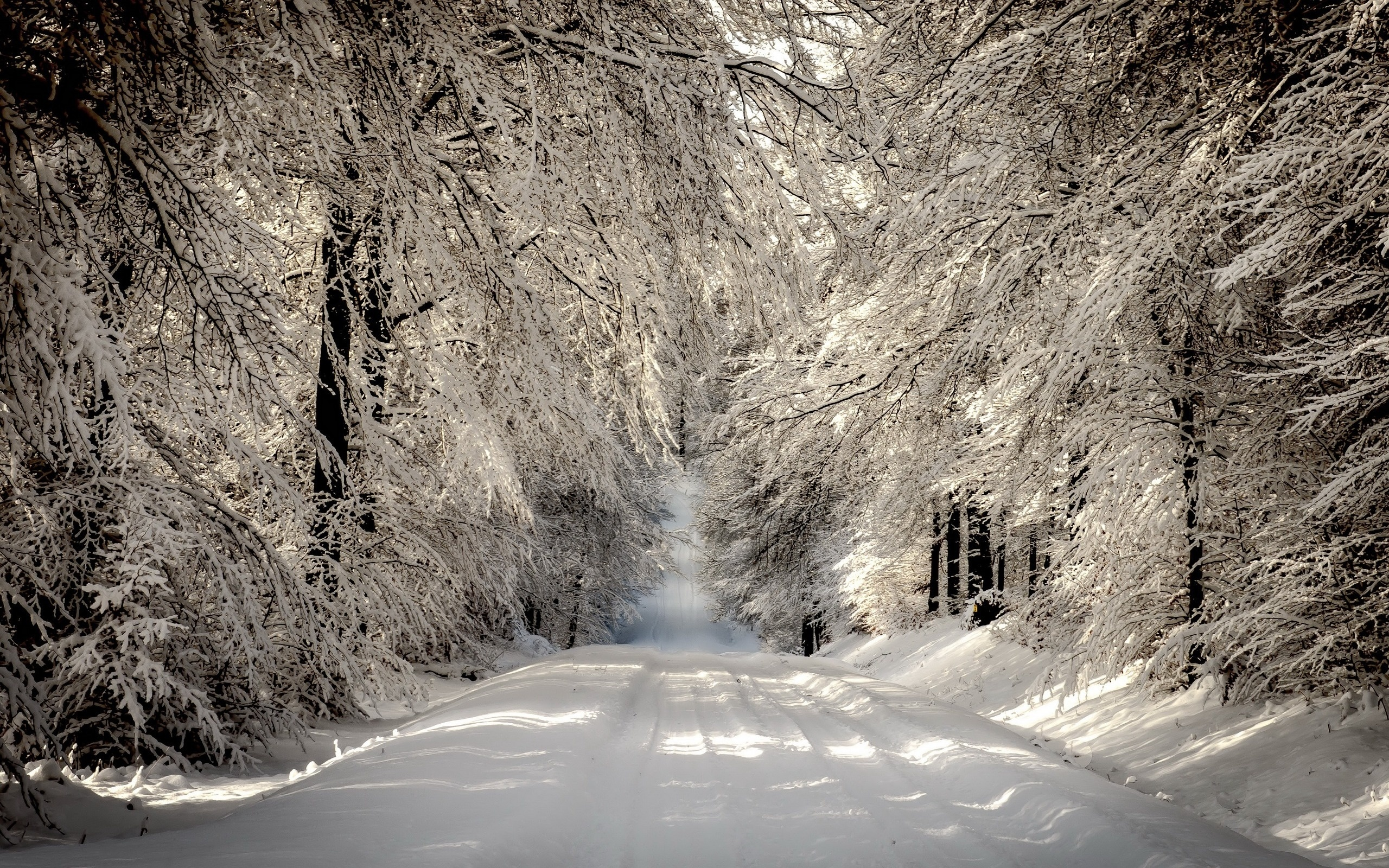 Красивая зимняя картинка на аву арку