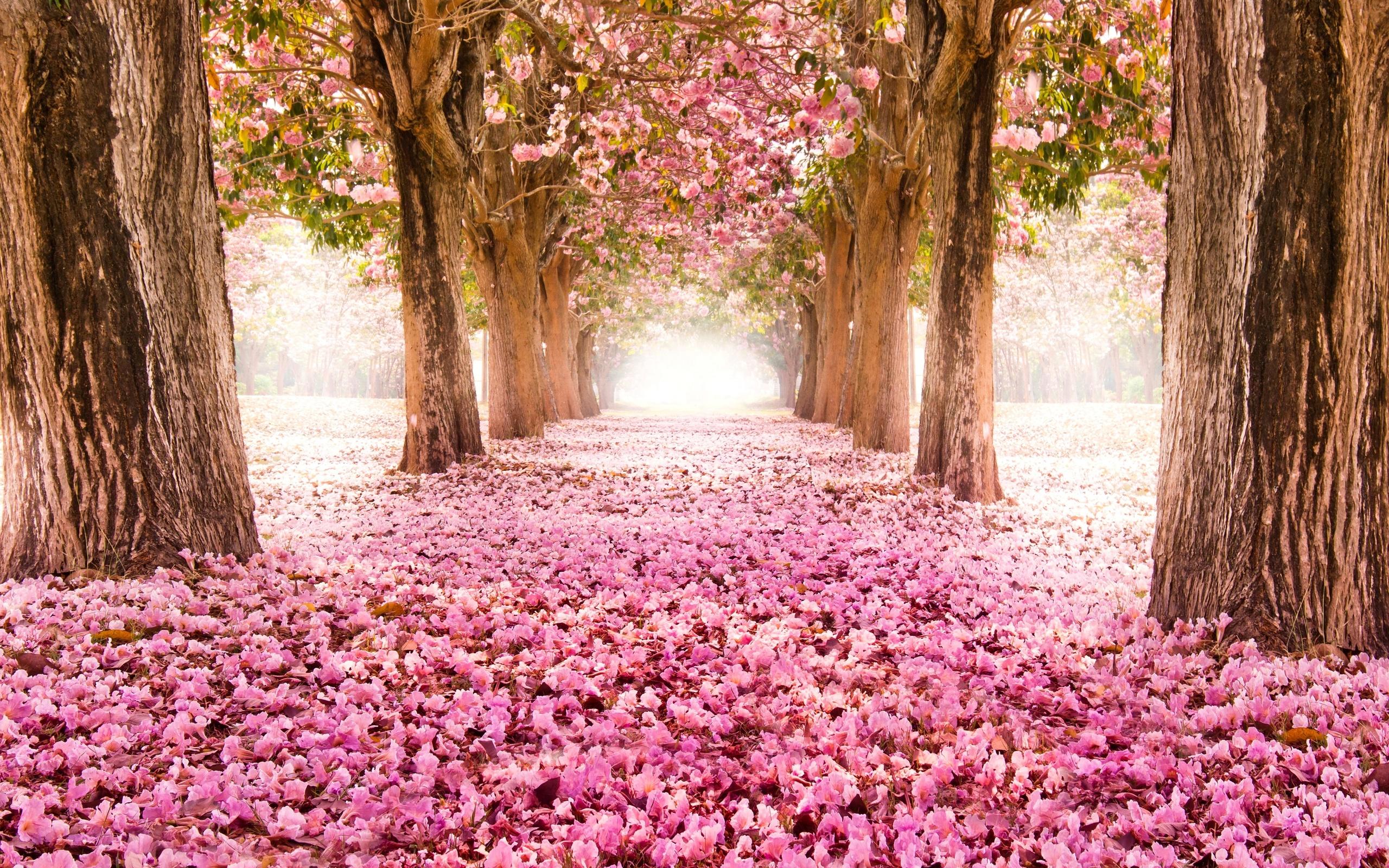 Утро, красивые картинки с природой