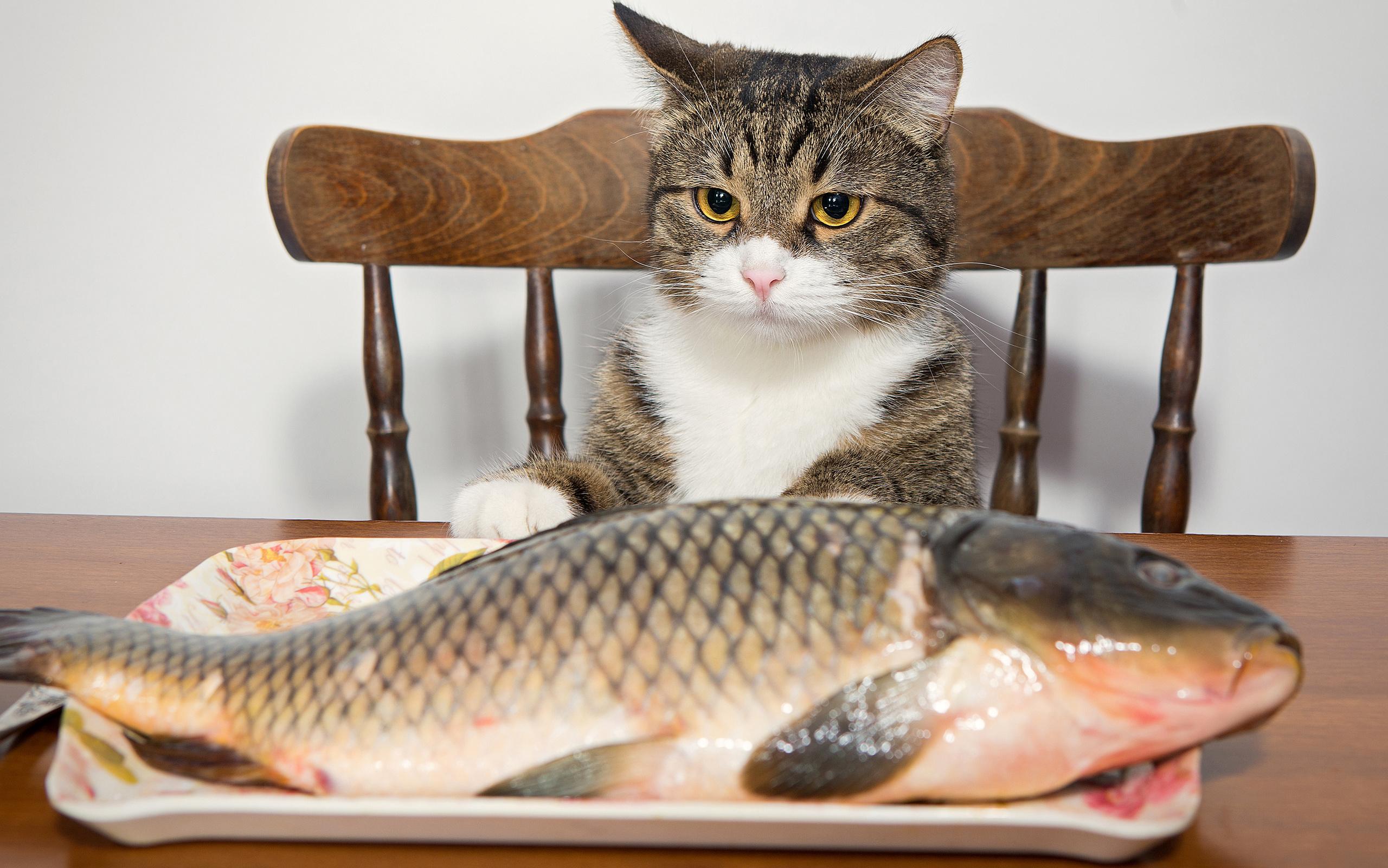 вам картинки люблю рыбку кушать недавно его
