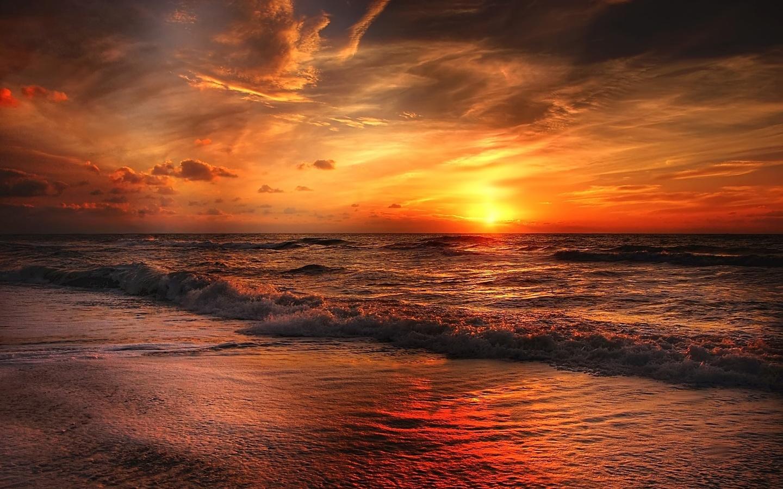 раннем картинки закат на берегу моря человека животных включая