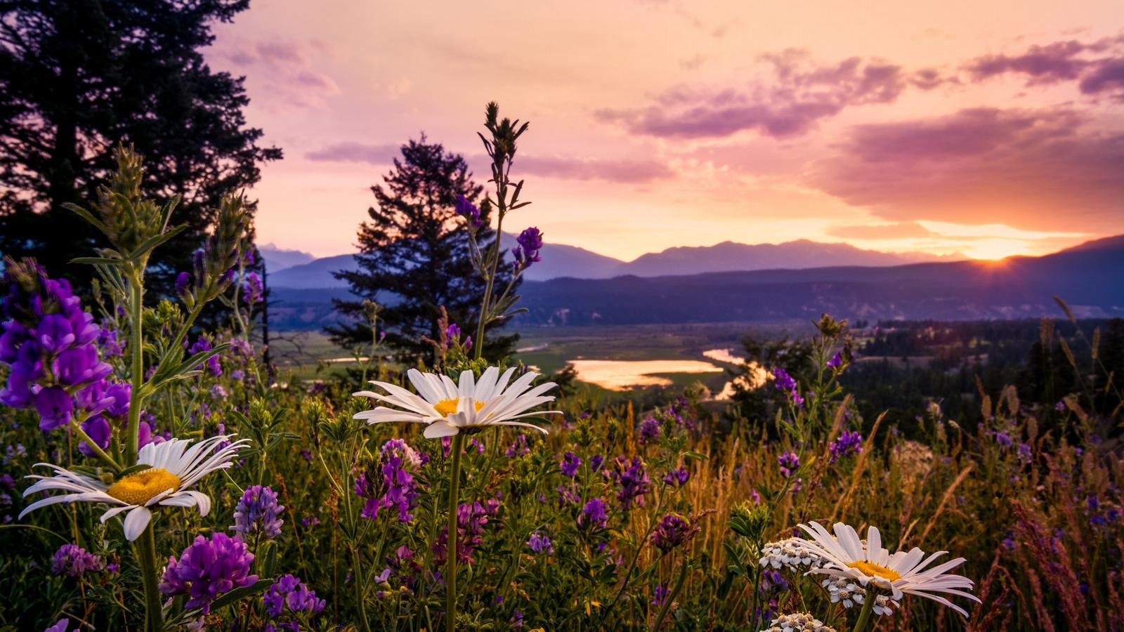 Доброго летнего вечера красивые картинки