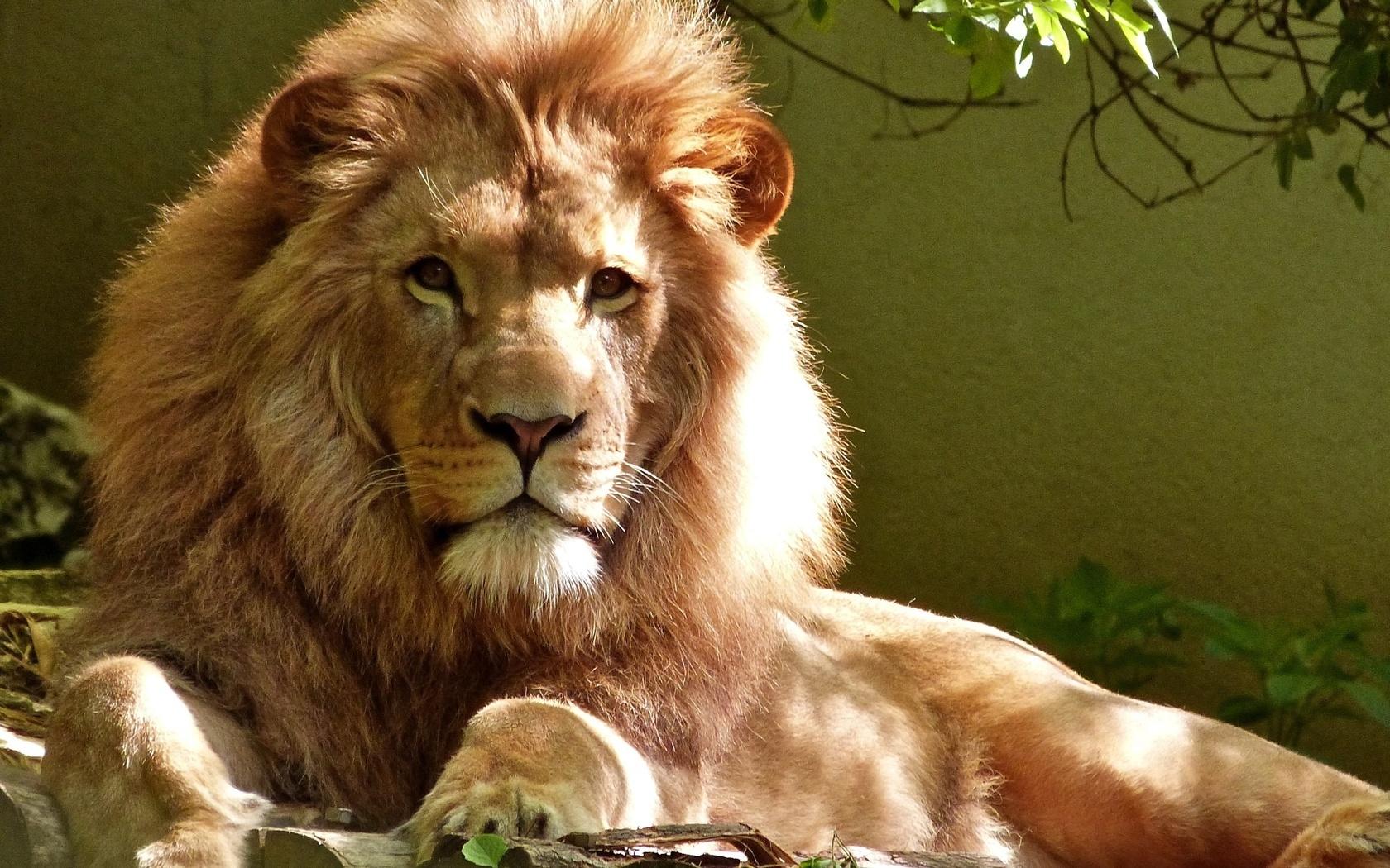 интересные картинки льва центра барселоны