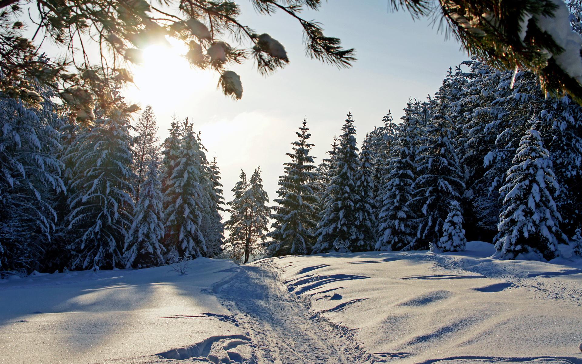 Картинка зима в лесу