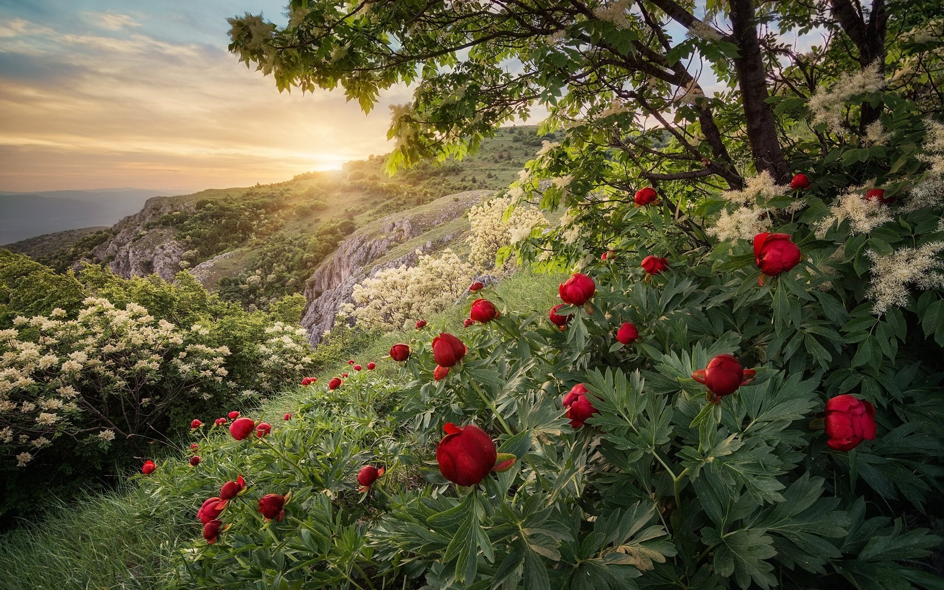 Картинки пейзажи с цветами