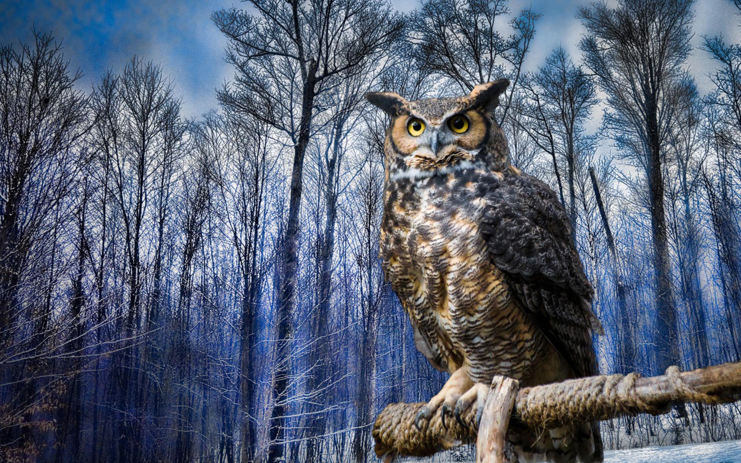 Картинки животные и птицы леса