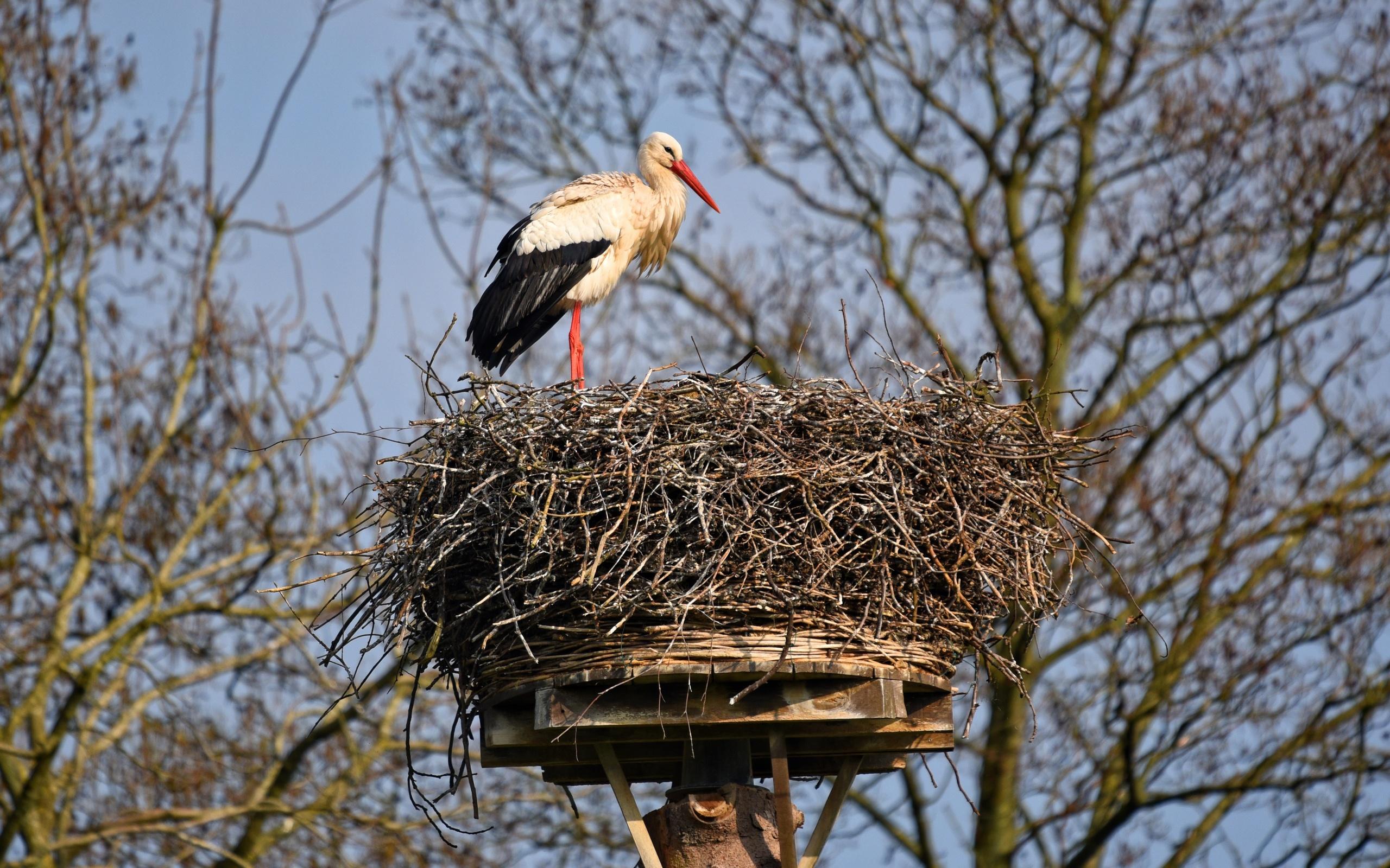 картинка аист в гнезде на дереве что сердечки готовятся