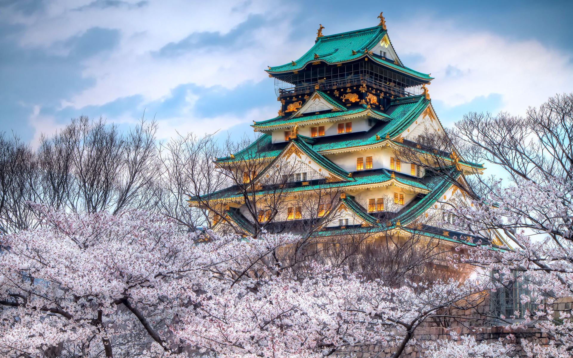 картинка пагода и сакура исполнилось восемь лет