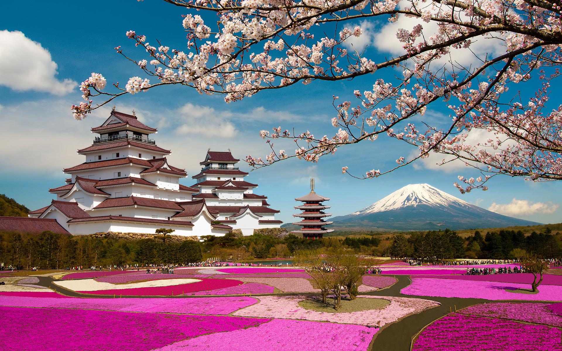 Японская картинка сакура