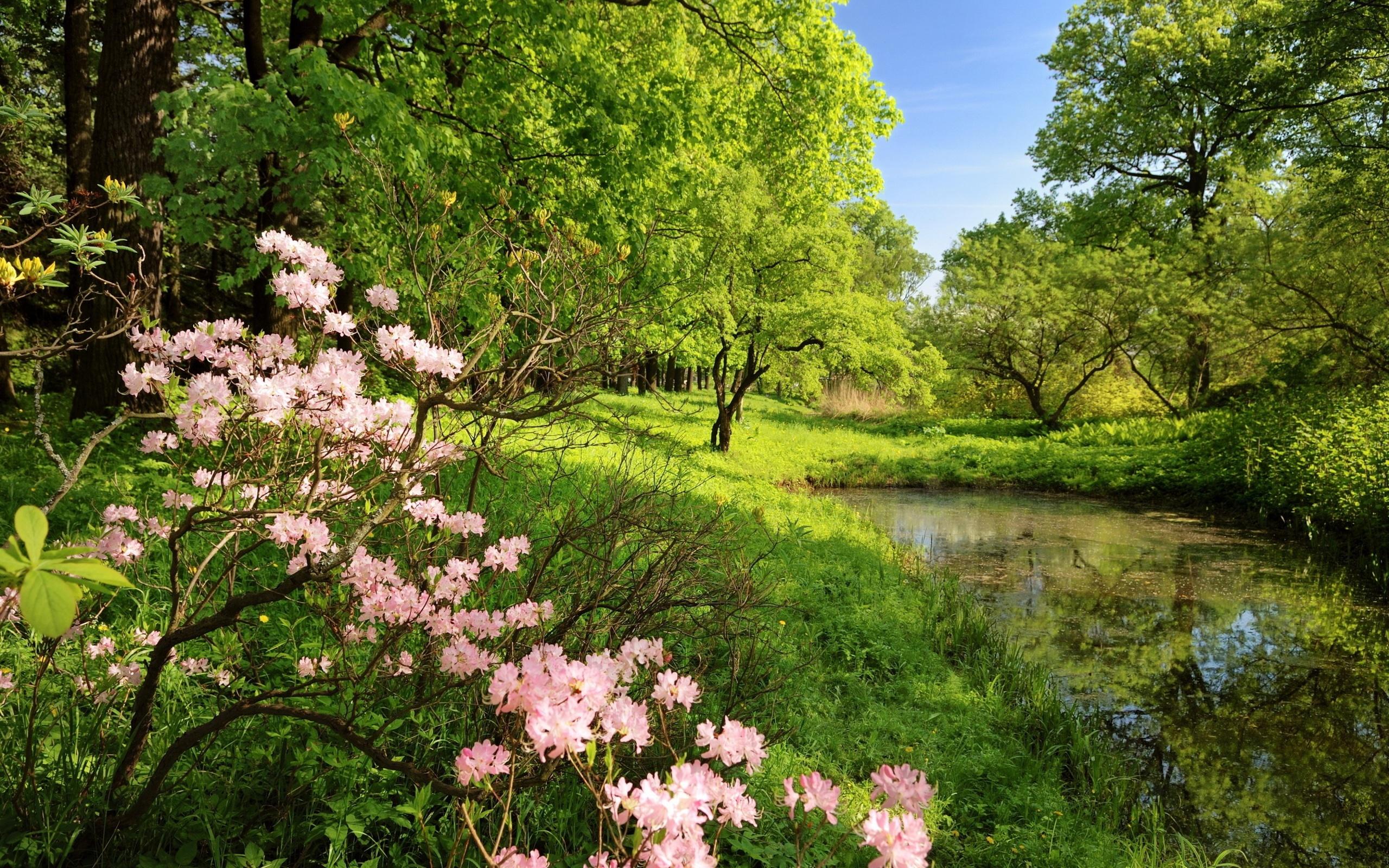 Новогодние картинки, природа весна картинки