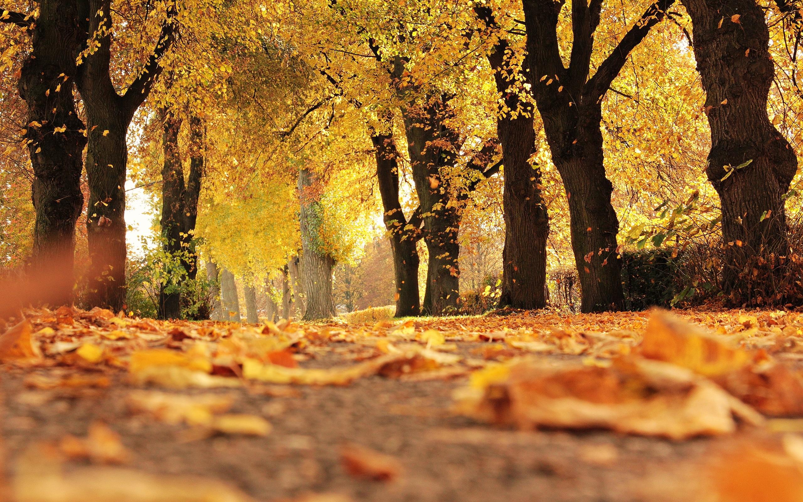 красивое фото про осень появились времена