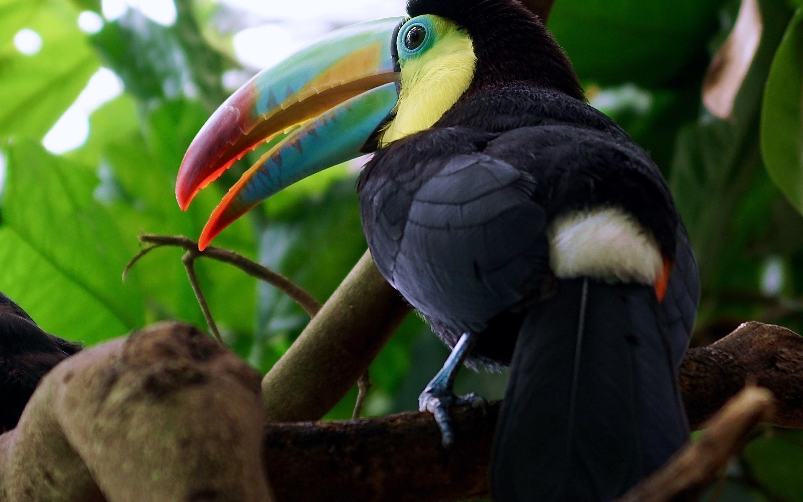 Картинки экзотических крупных птиц с названиями