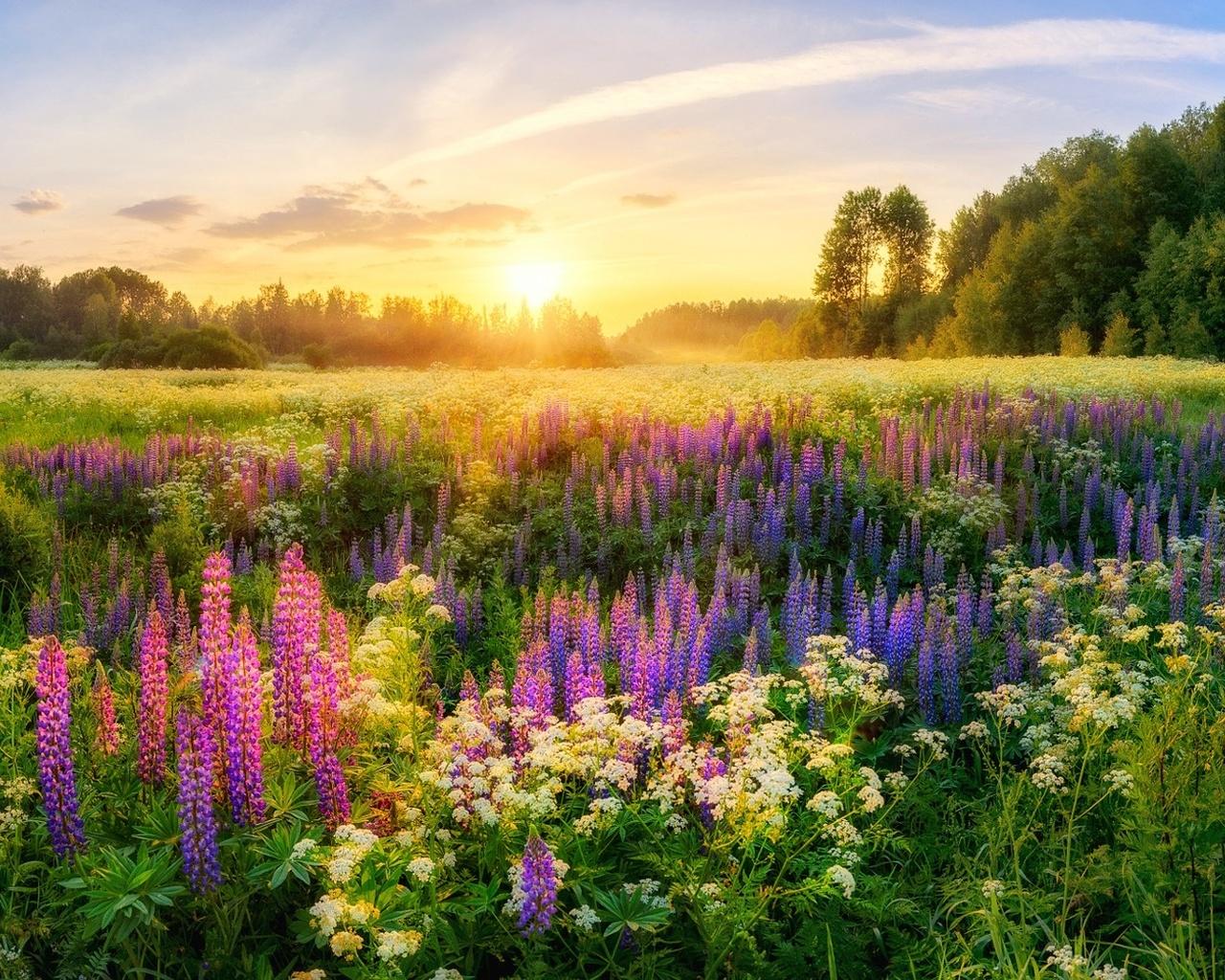Поздравления месяцами, летние картинки с природой
