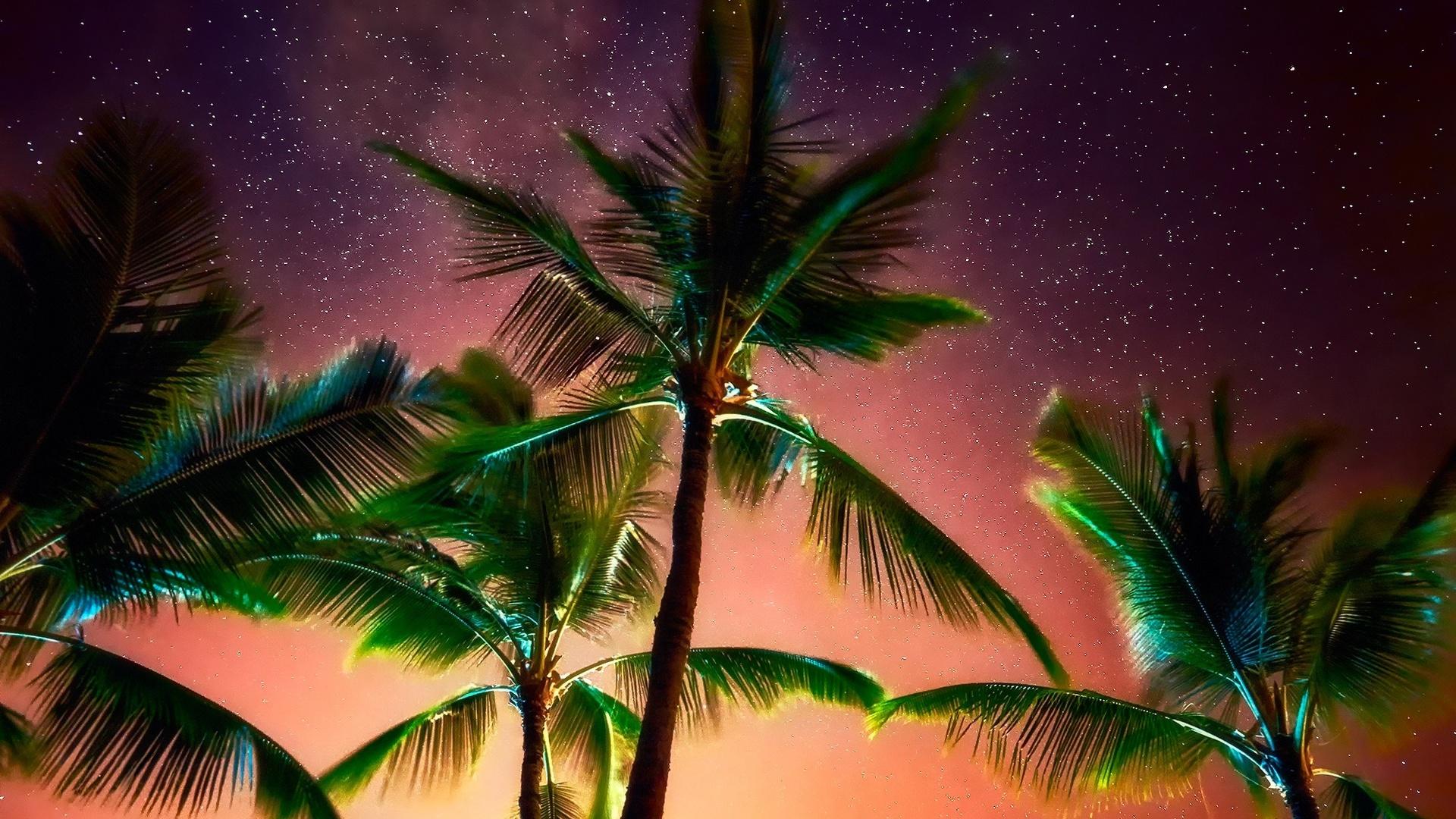 никогда пальмы природа картинки рецепты запекания