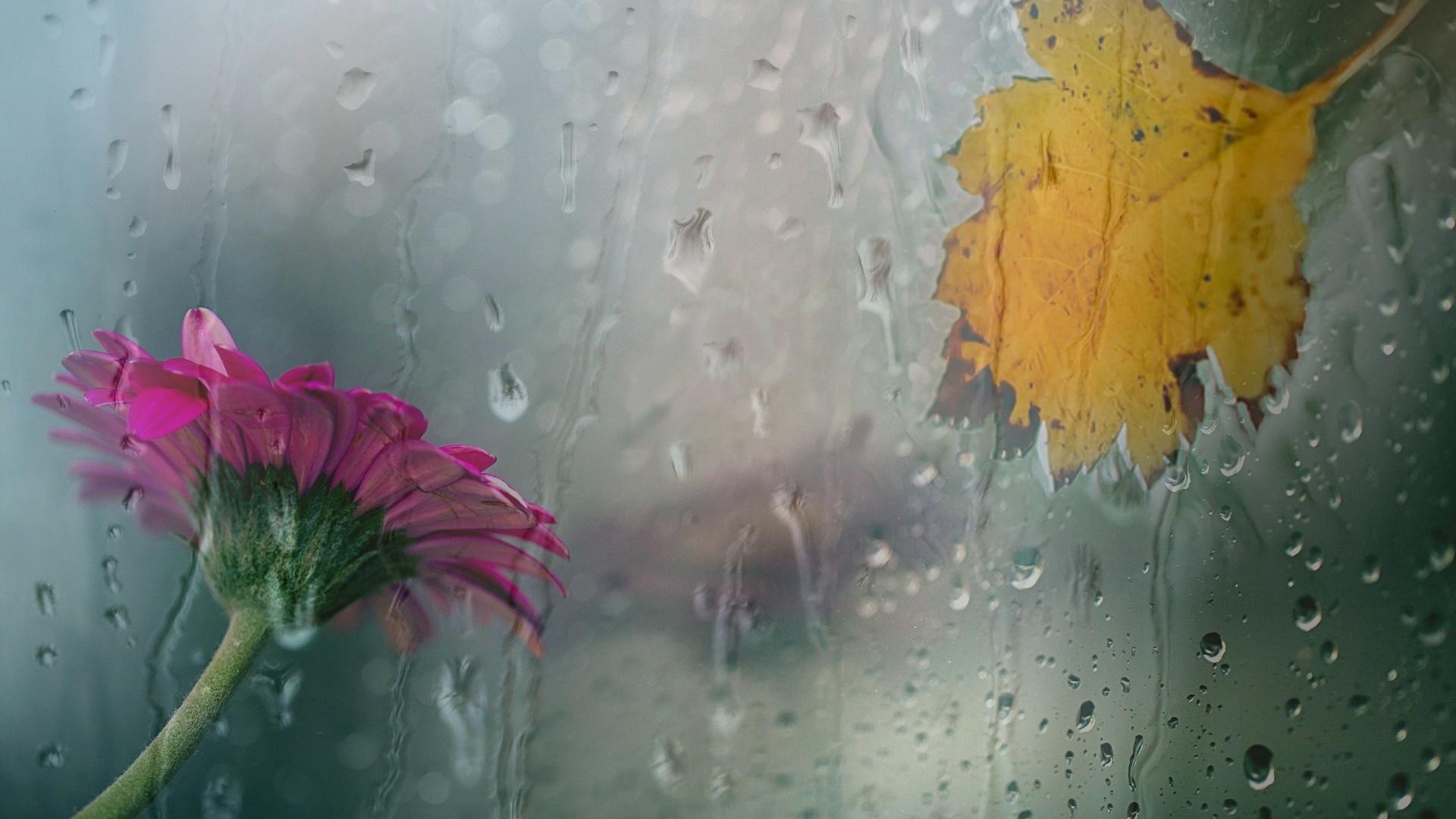 цвет под дождем картинка продаются специальные