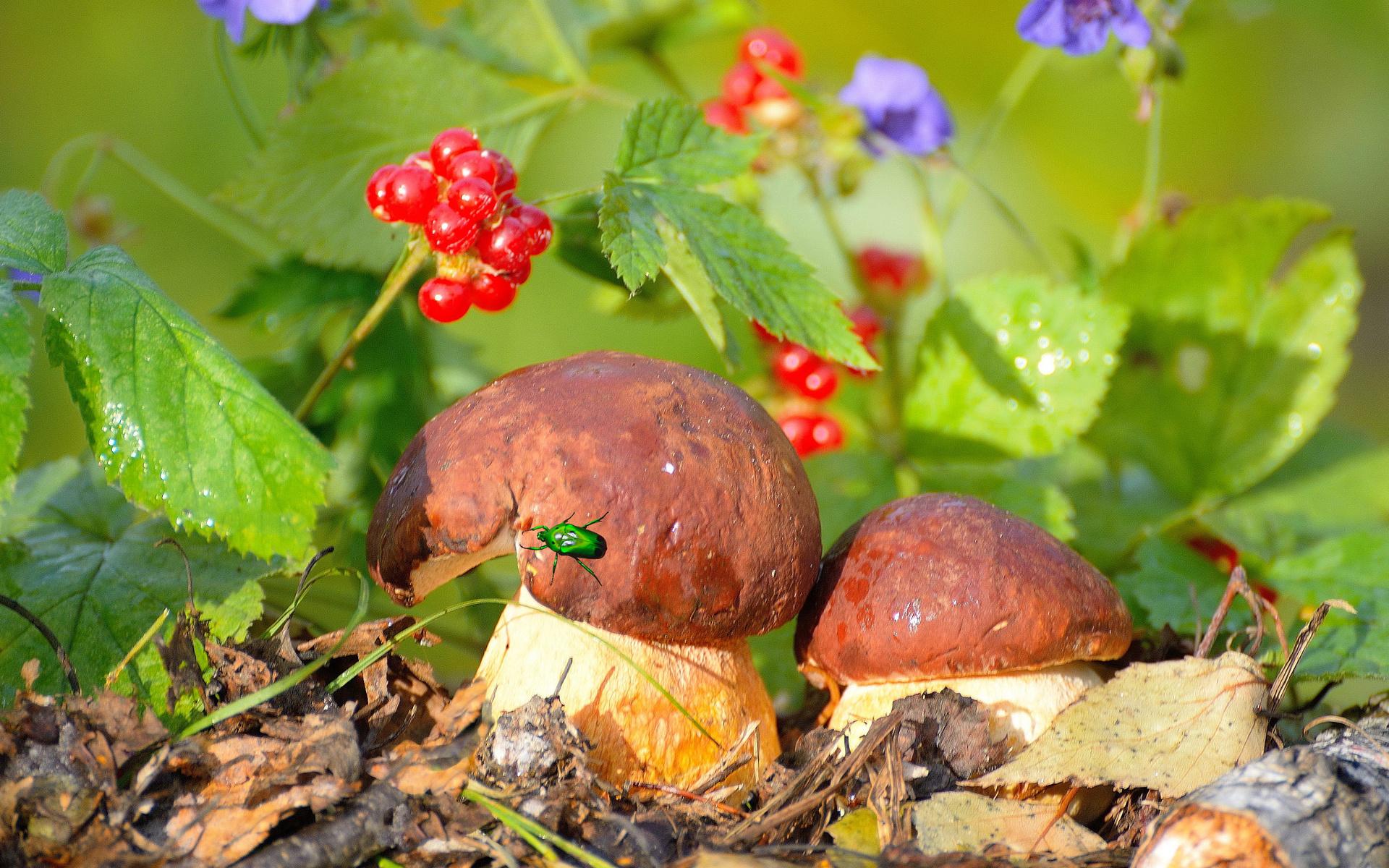 Картинки грибы в лесу для детей