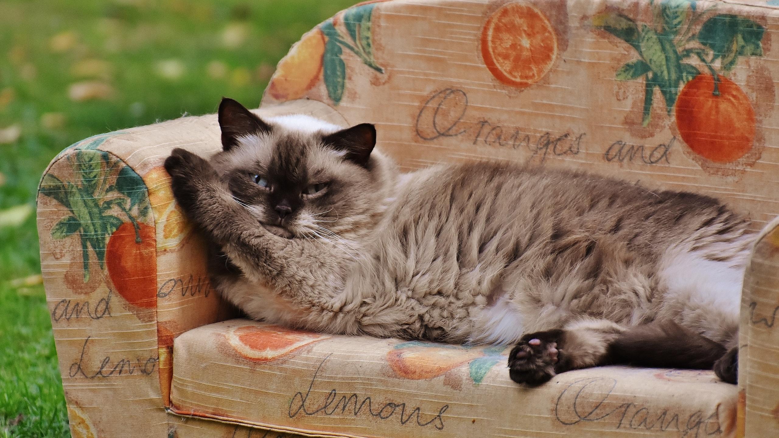 отдыхай котик картинки обучения его