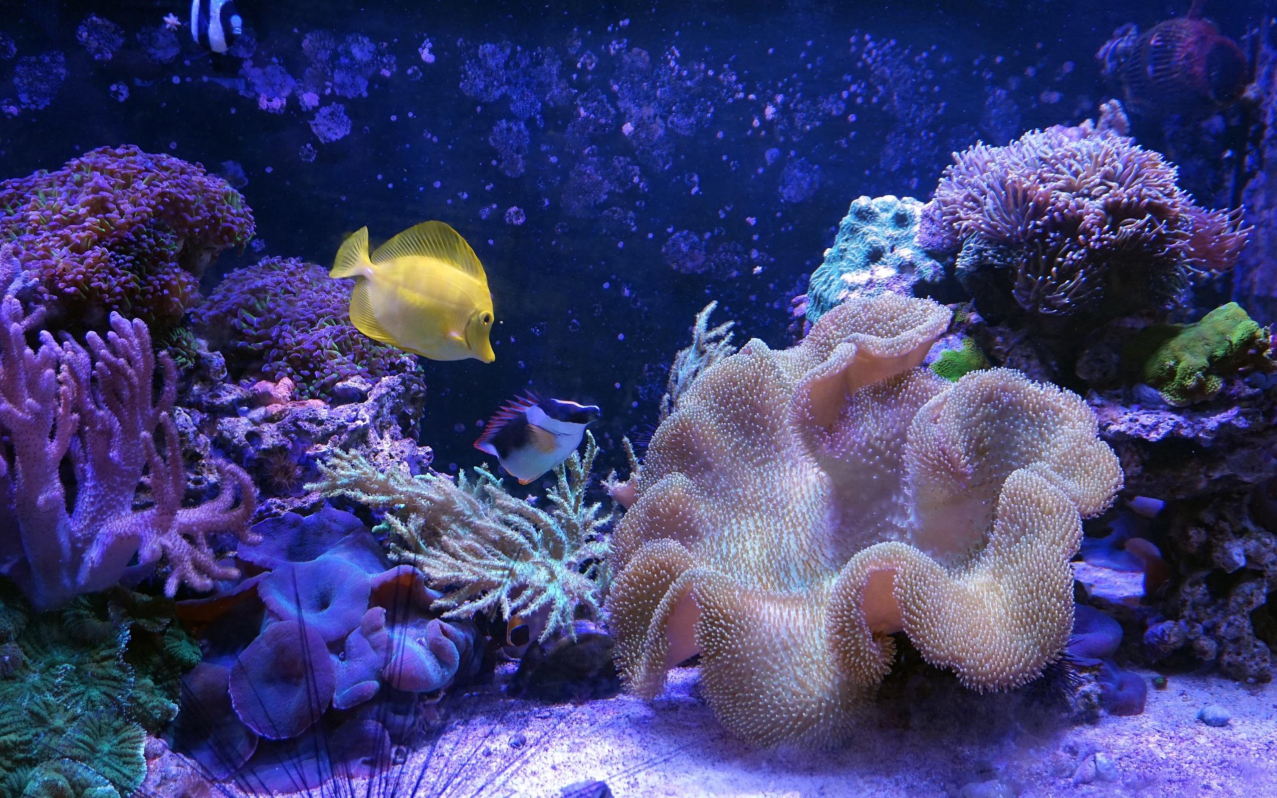 смотровой площадкой самые красивые фоновые картинки подводных животных тех пор девушка