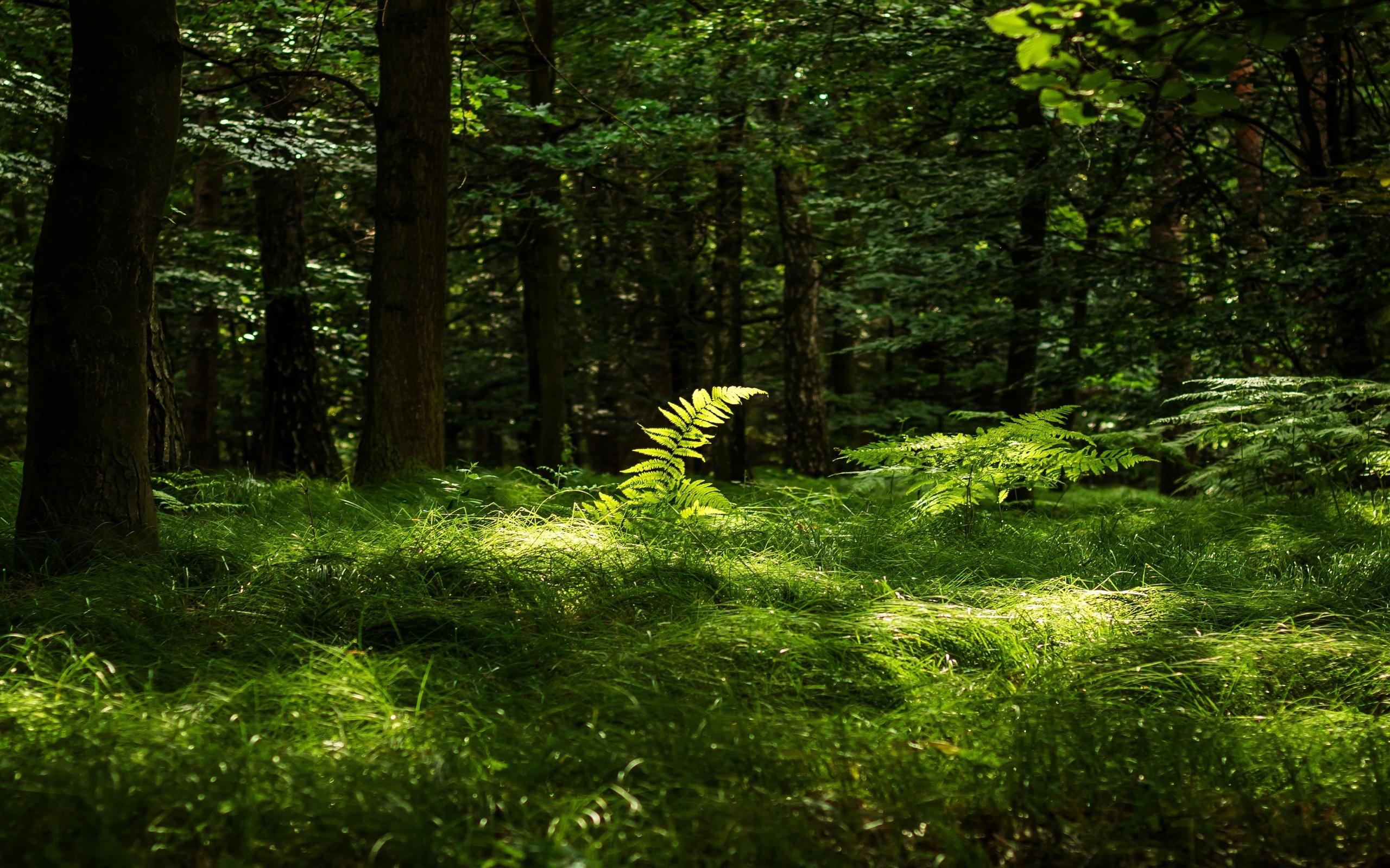картинки фон трава лес