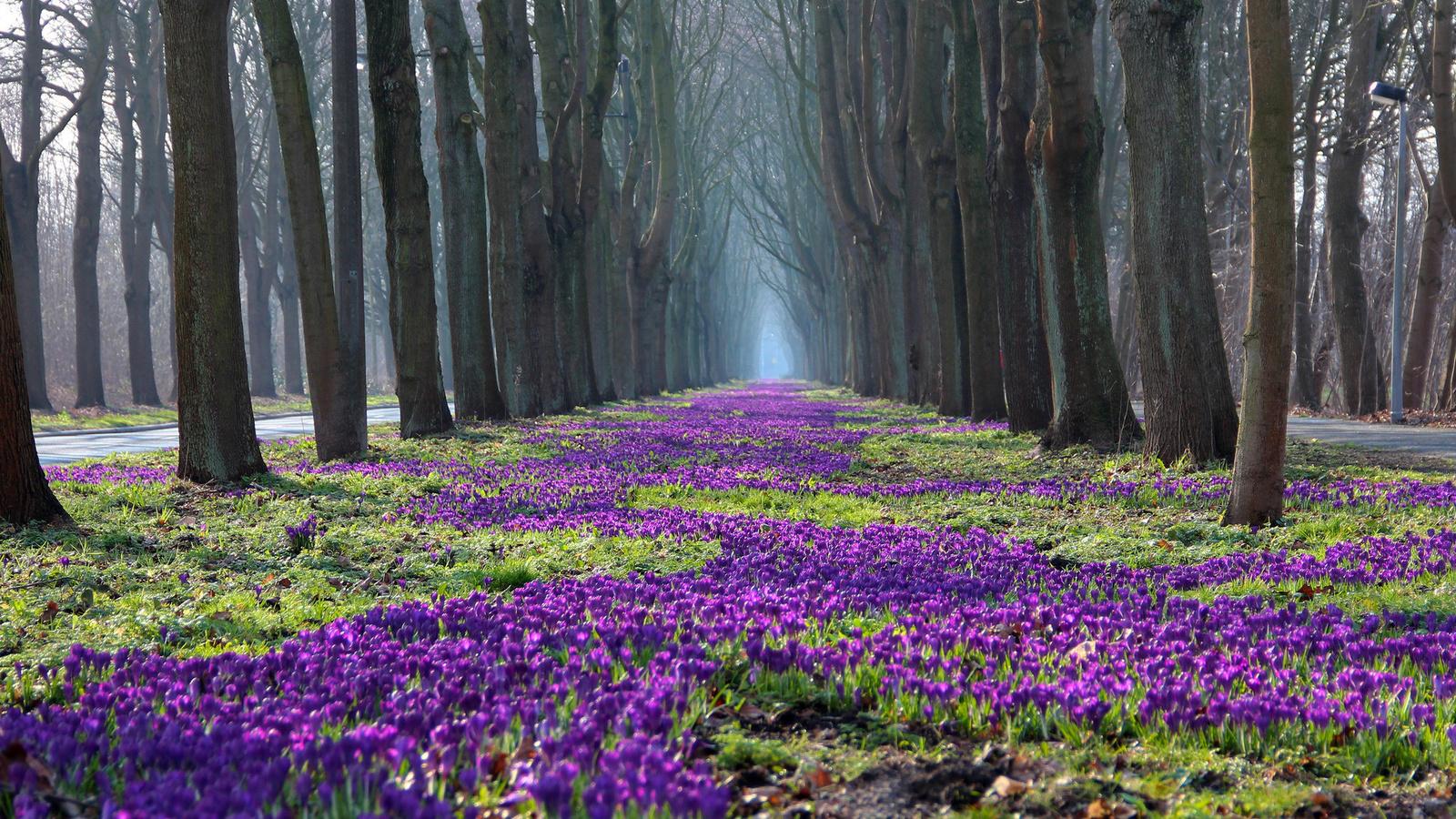 Картинки о природе весна красивые, прикольные немецкие женщины